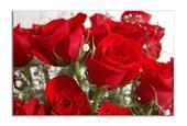 Obraz za polovičnú cenu - Červené ruže,