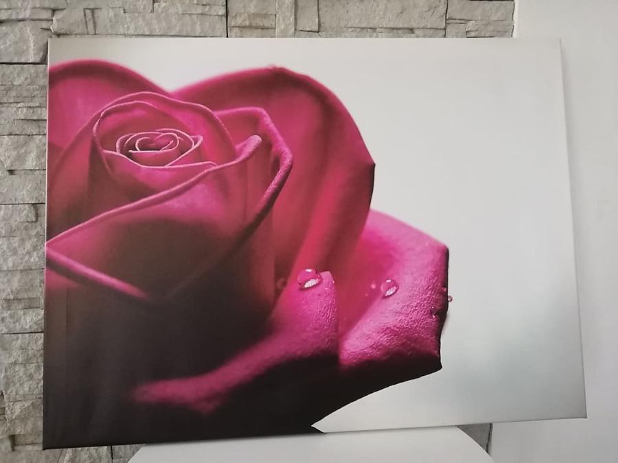 Obraz Ruža 80x60cm - Obrázok č. 1