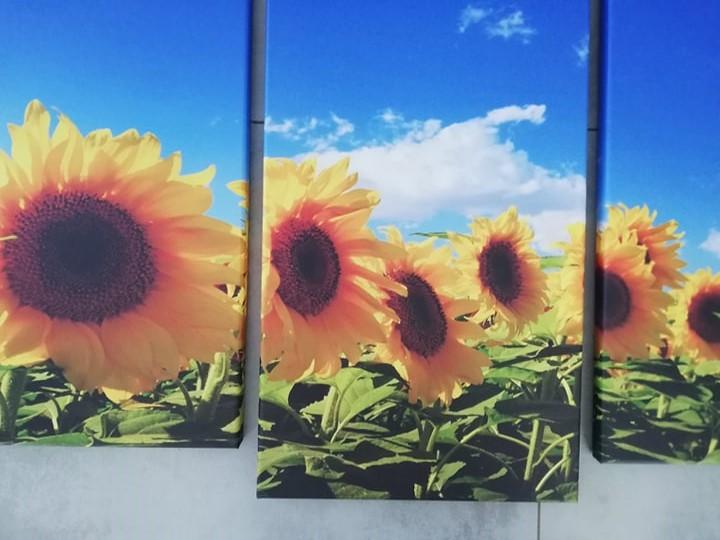 5 dielny Obraz Slnečnice 150x80cm - Obrázok č. 4
