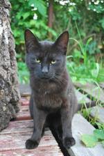 nepřijde vám ta kočka nějaká divná?