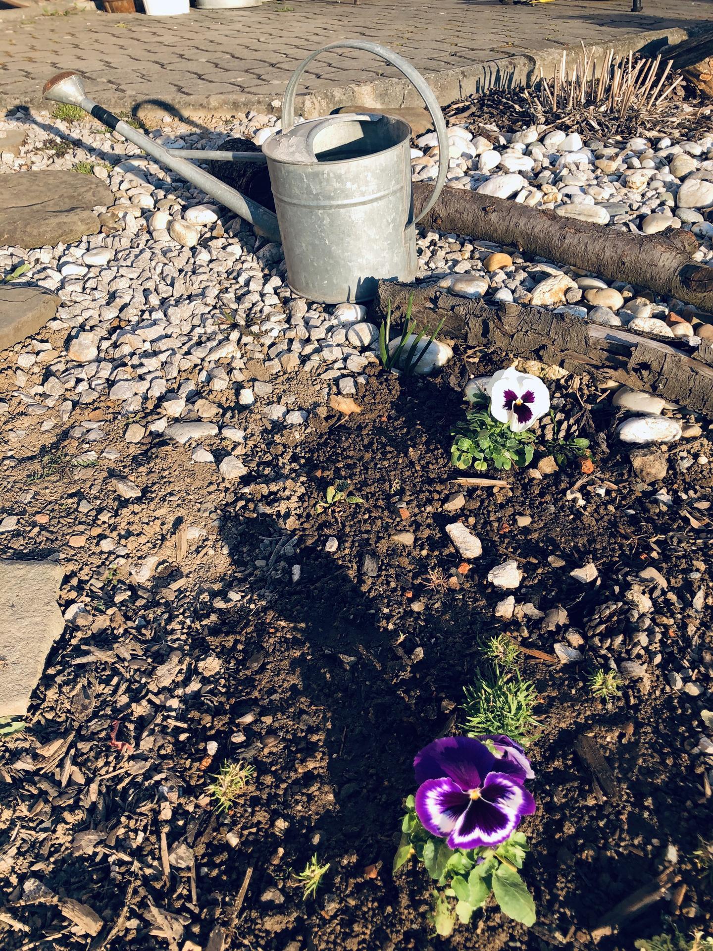 U nás doma a na zahradě 2020 - Obrázek č. 33