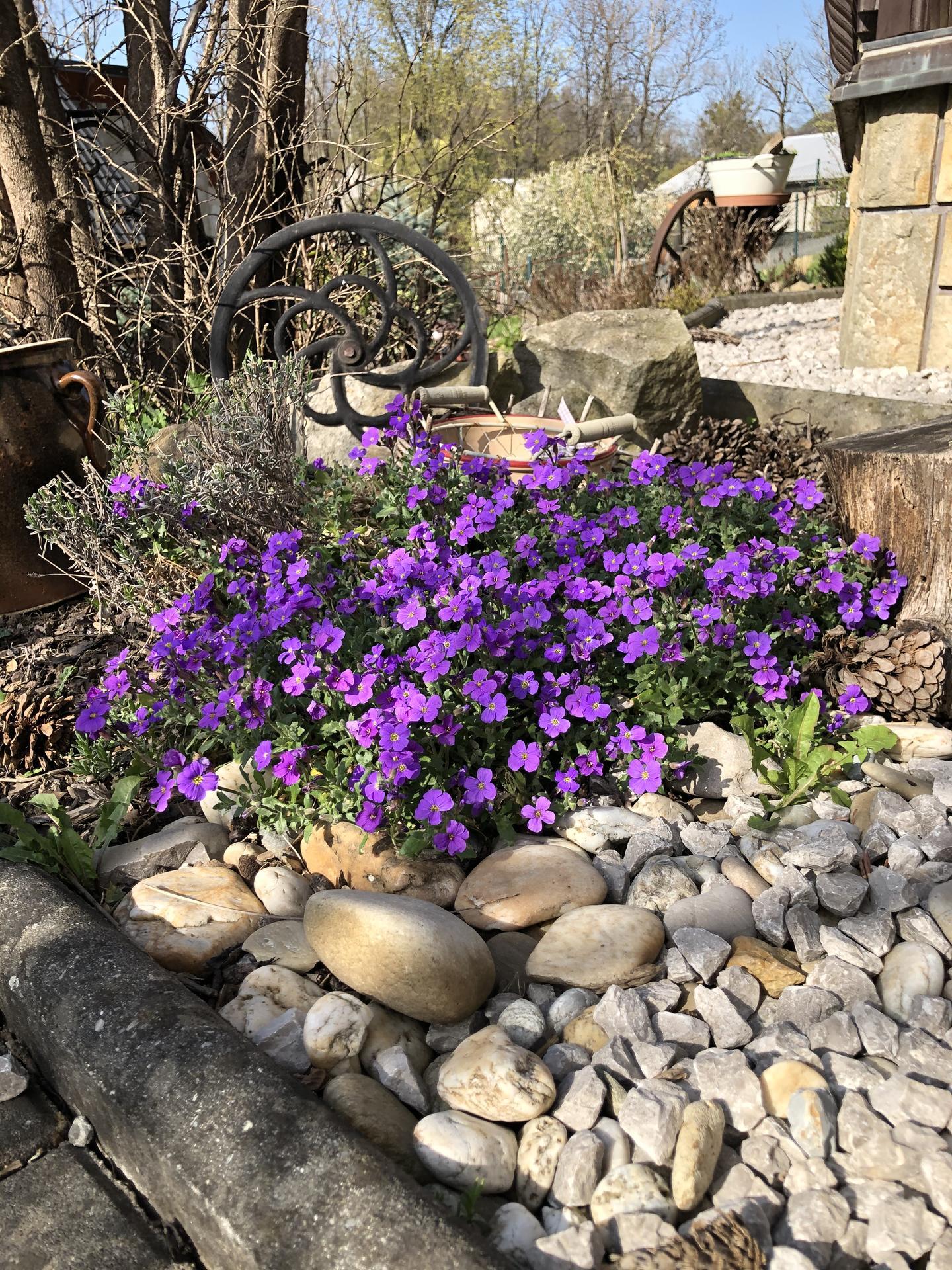 U nás doma a na zahradě 2020 - Obrázek č. 48
