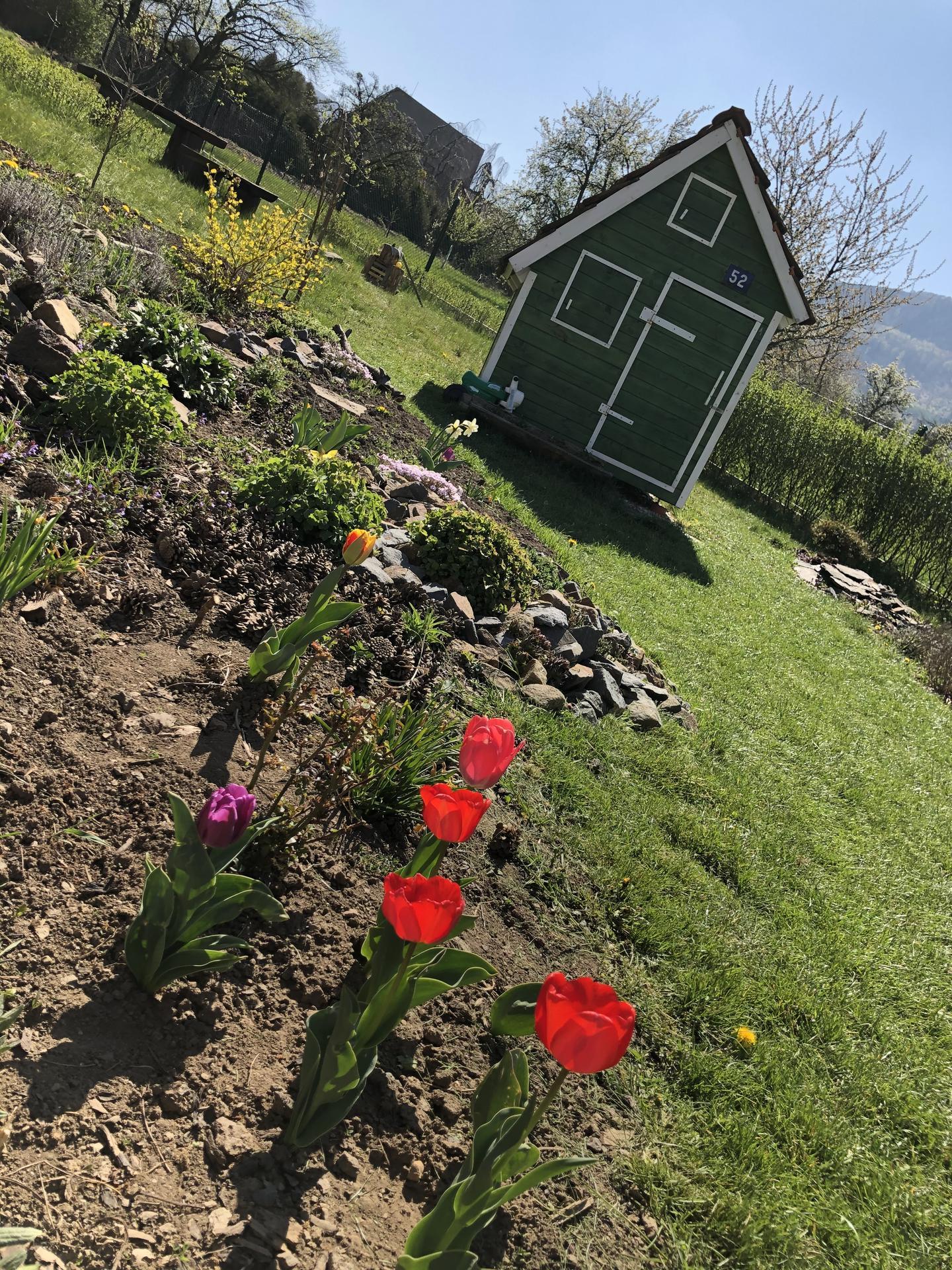U nás doma a na zahradě 2020 - Obrázek č. 50