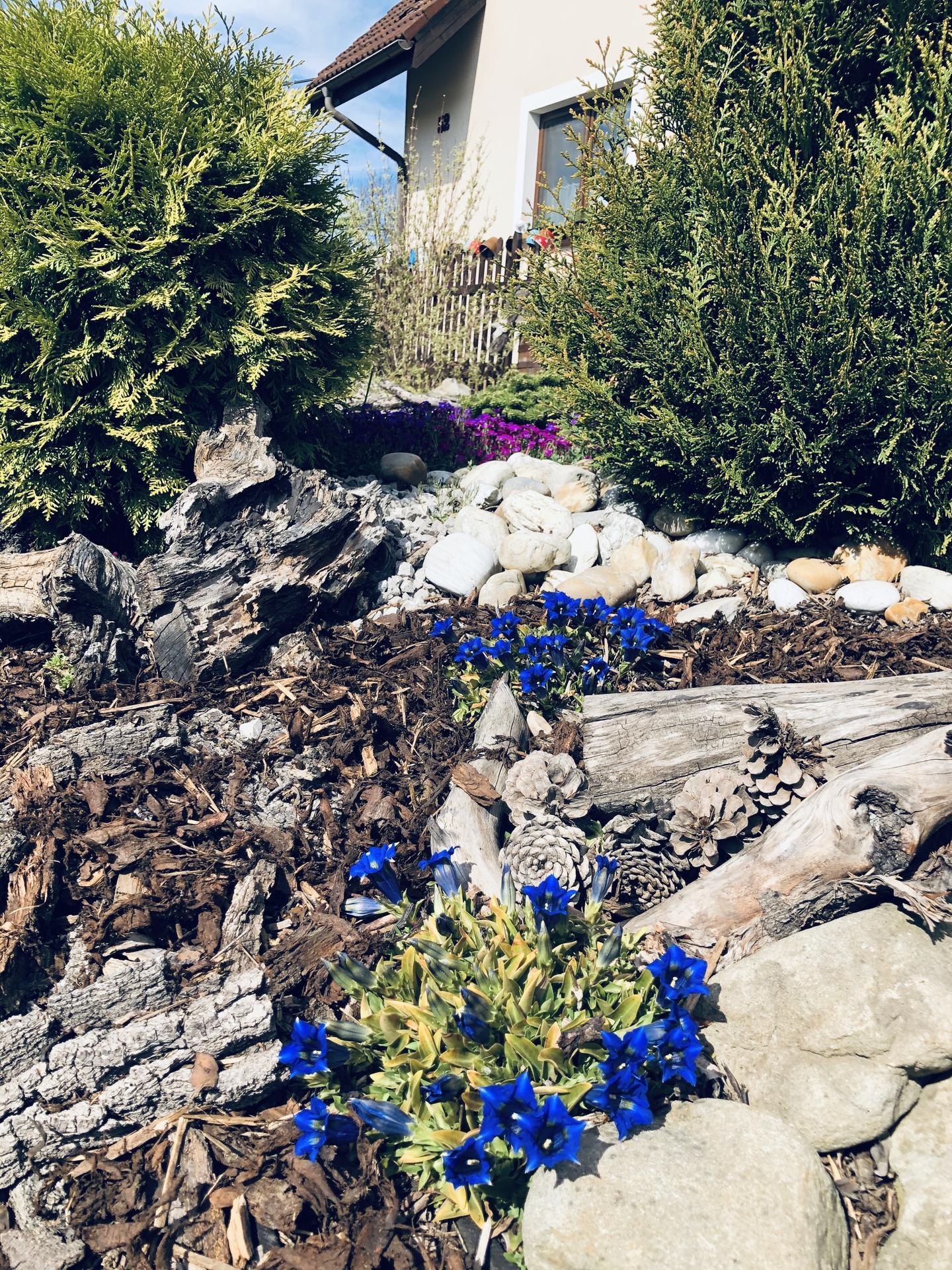 U nás doma a na zahradě 2020 - Obrázek č. 53
