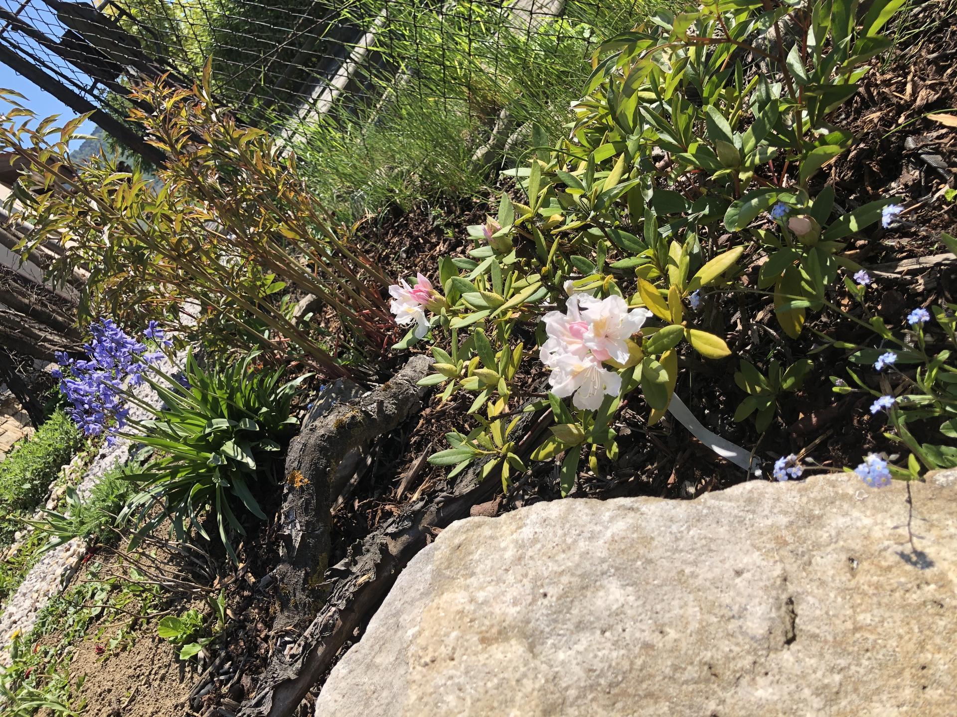 U nás doma a na zahradě 2020 - Obrázek č. 63