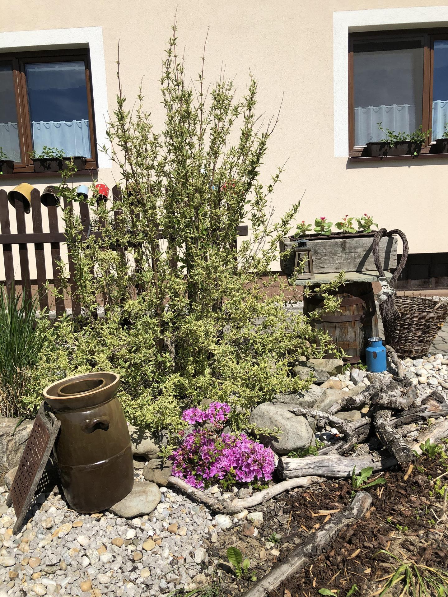 U nás doma a na zahradě 2020 - Obrázek č. 61
