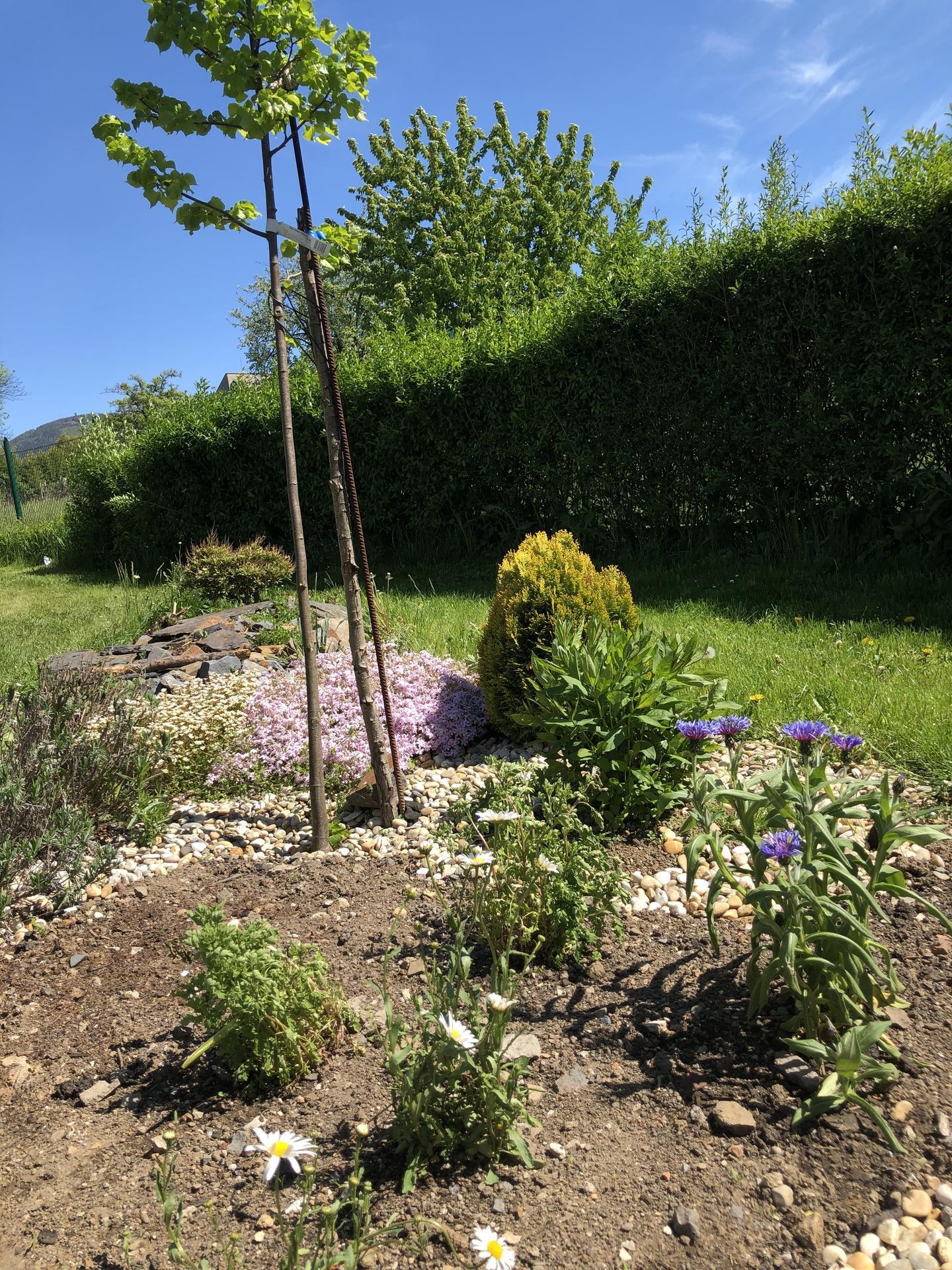 U nás doma a na zahradě 2020 - Obrázek č. 58