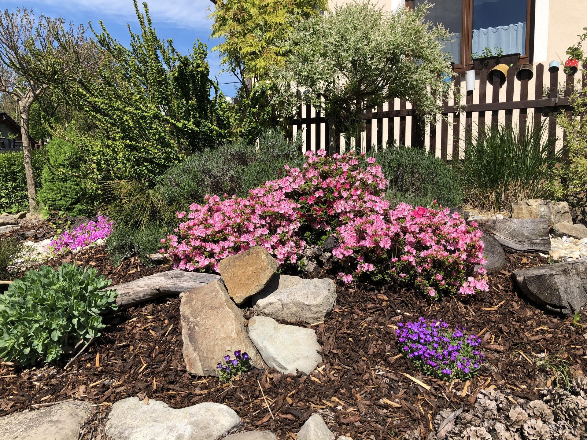 U nás doma a na zahradě 2020 - Obrázek č. 60