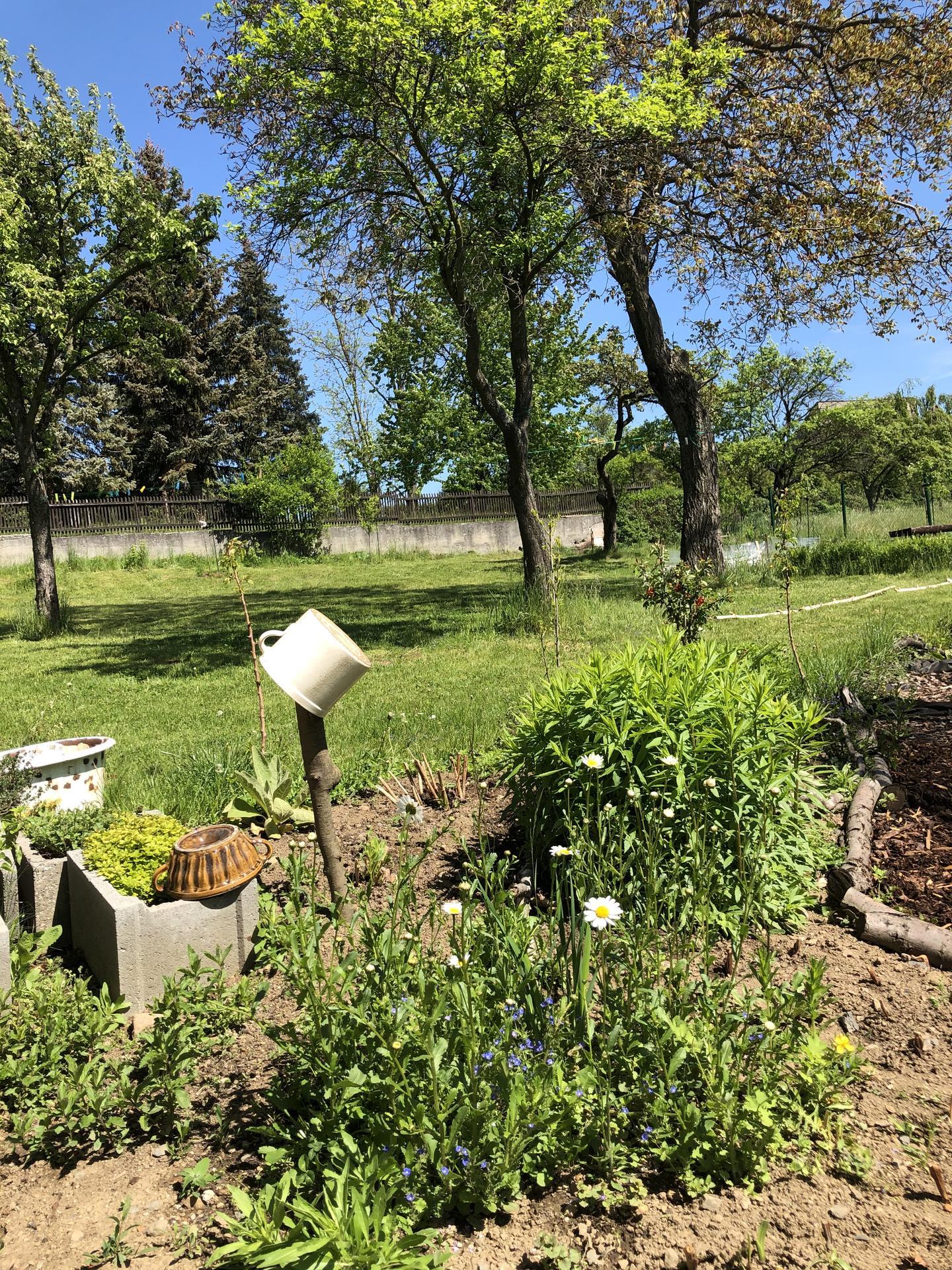 U nás doma a na zahradě 2020 - Obrázek č. 56