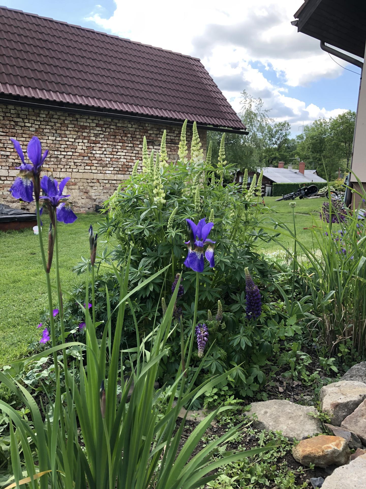 U nás doma a na zahradě 2020 - Obrázek č. 66