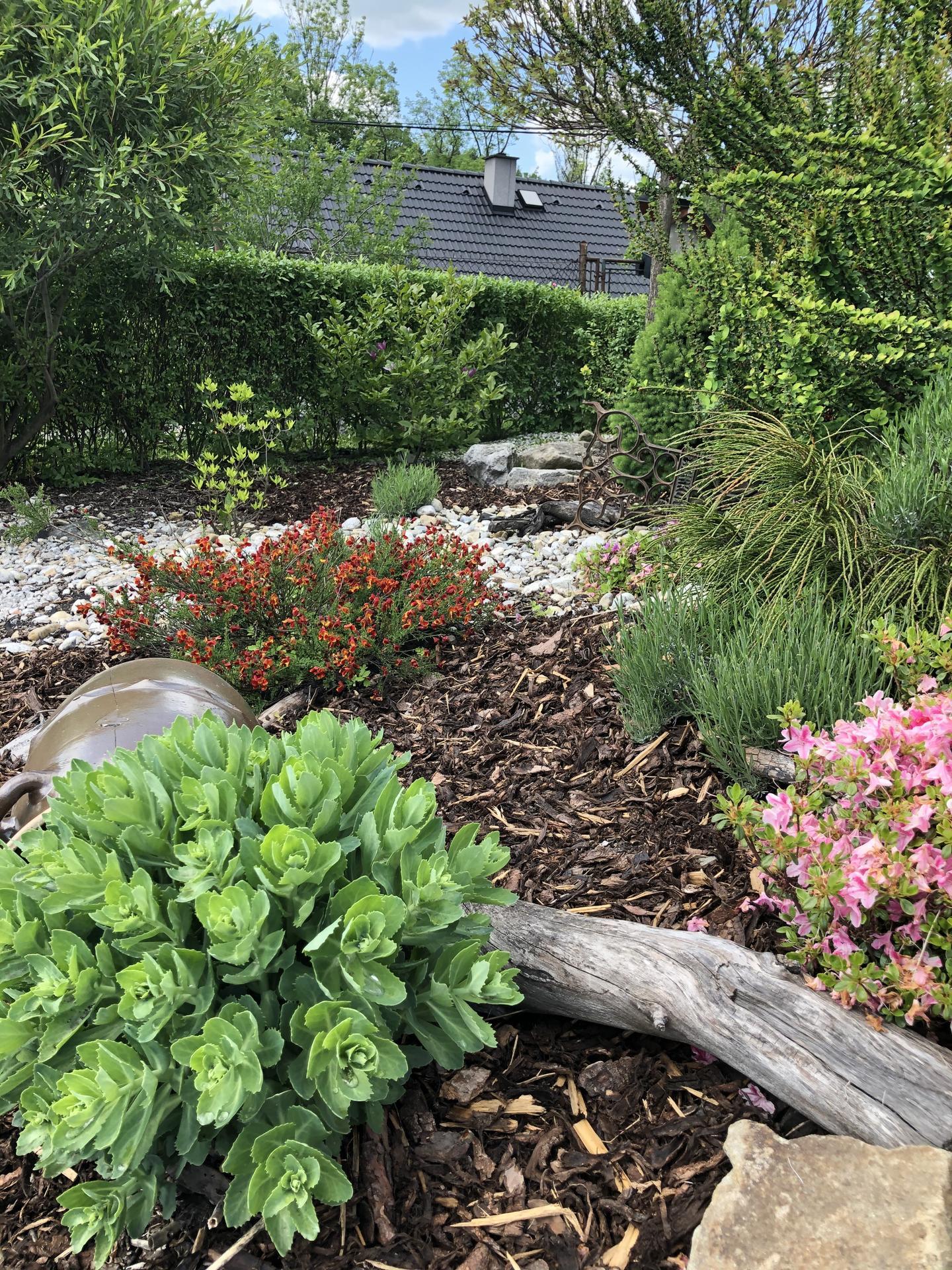 U nás doma a na zahradě 2020 - Obrázek č. 71