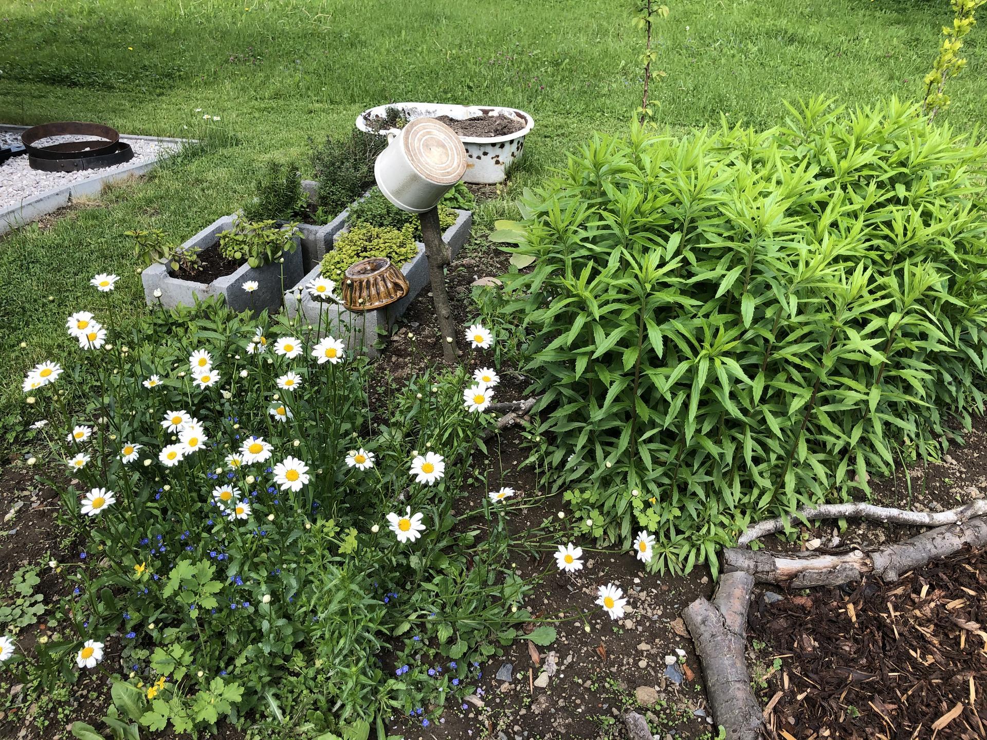 U nás doma a na zahradě 2020 - Obrázek č. 67
