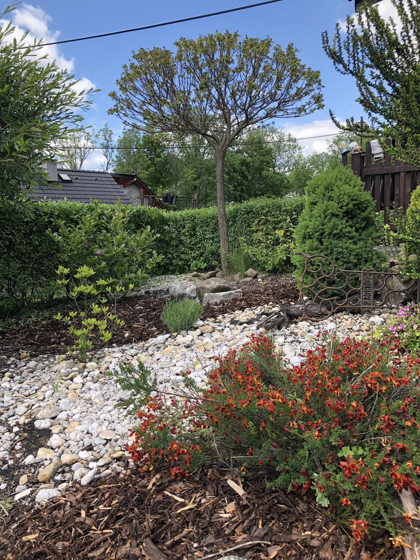 U nás doma a na zahradě 2020 - Obrázek č. 72
