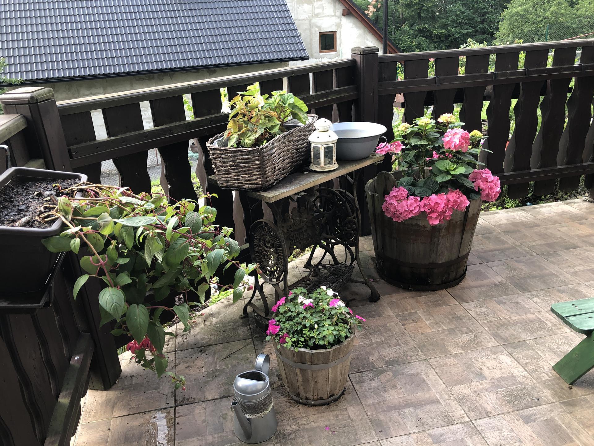 U nás doma a na zahradě 2020 - Obrázek č. 83