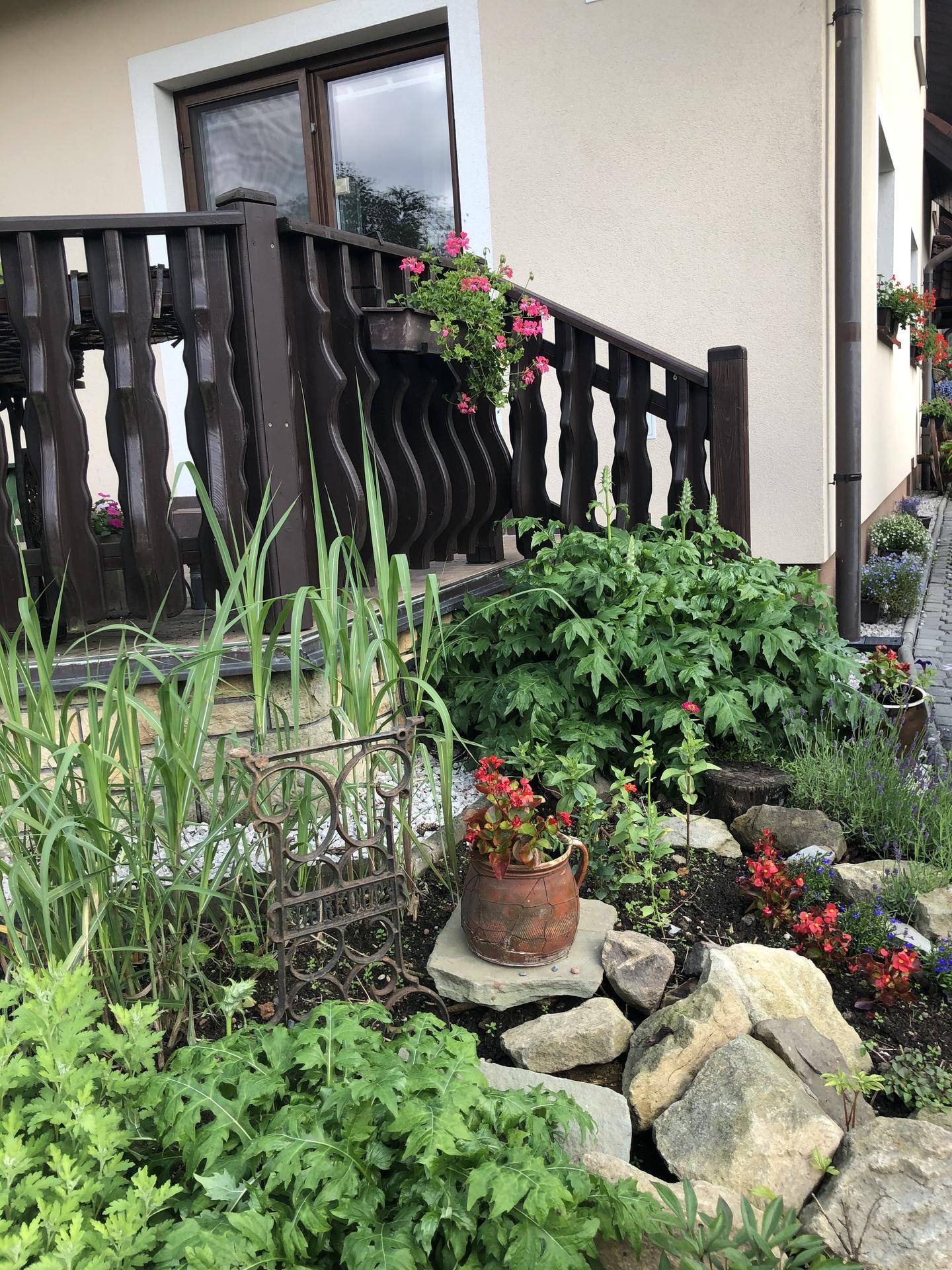 U nás doma a na zahradě 2020 - Obrázek č. 82