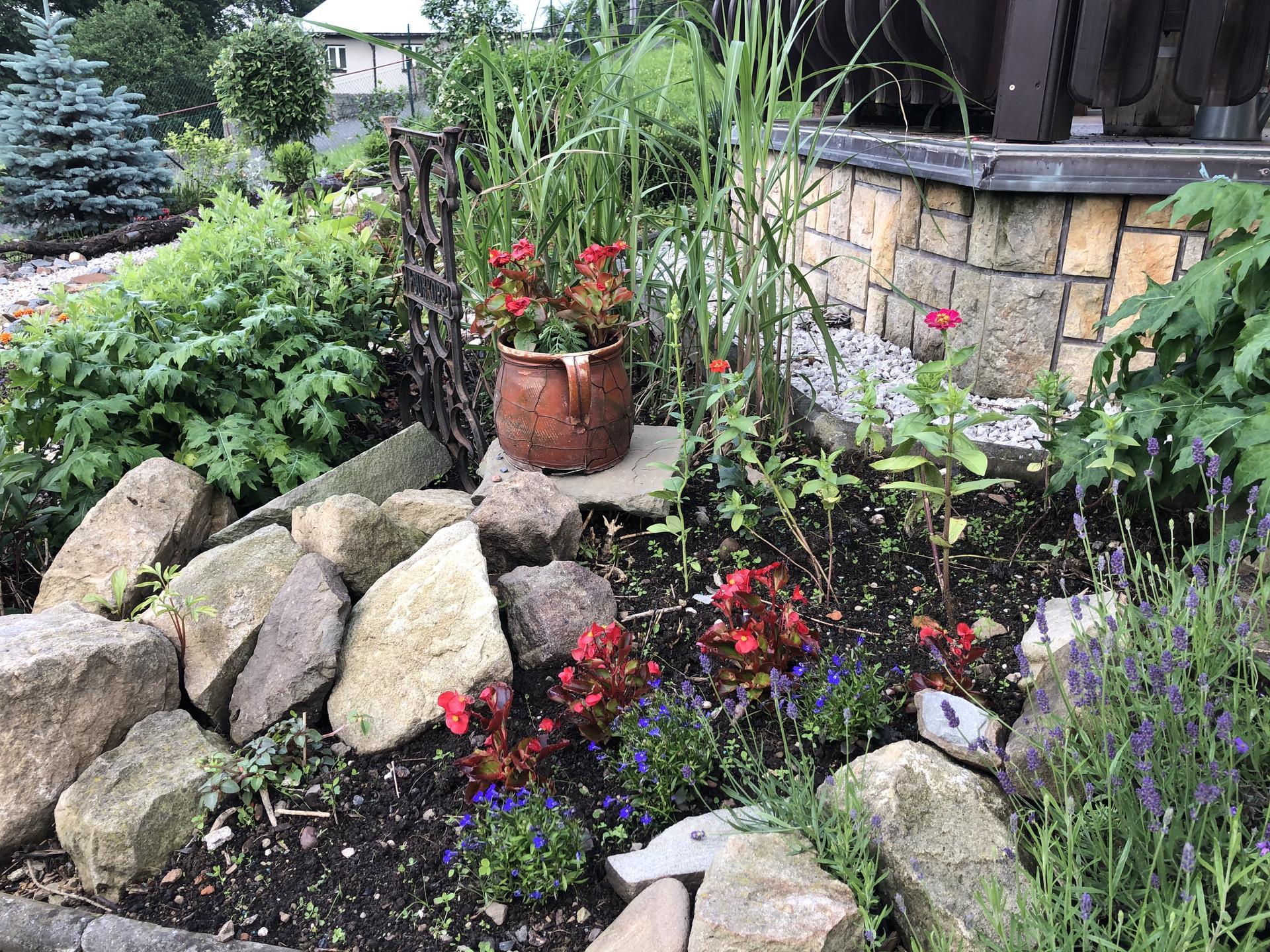 U nás doma a na zahradě 2020 - Obrázek č. 78