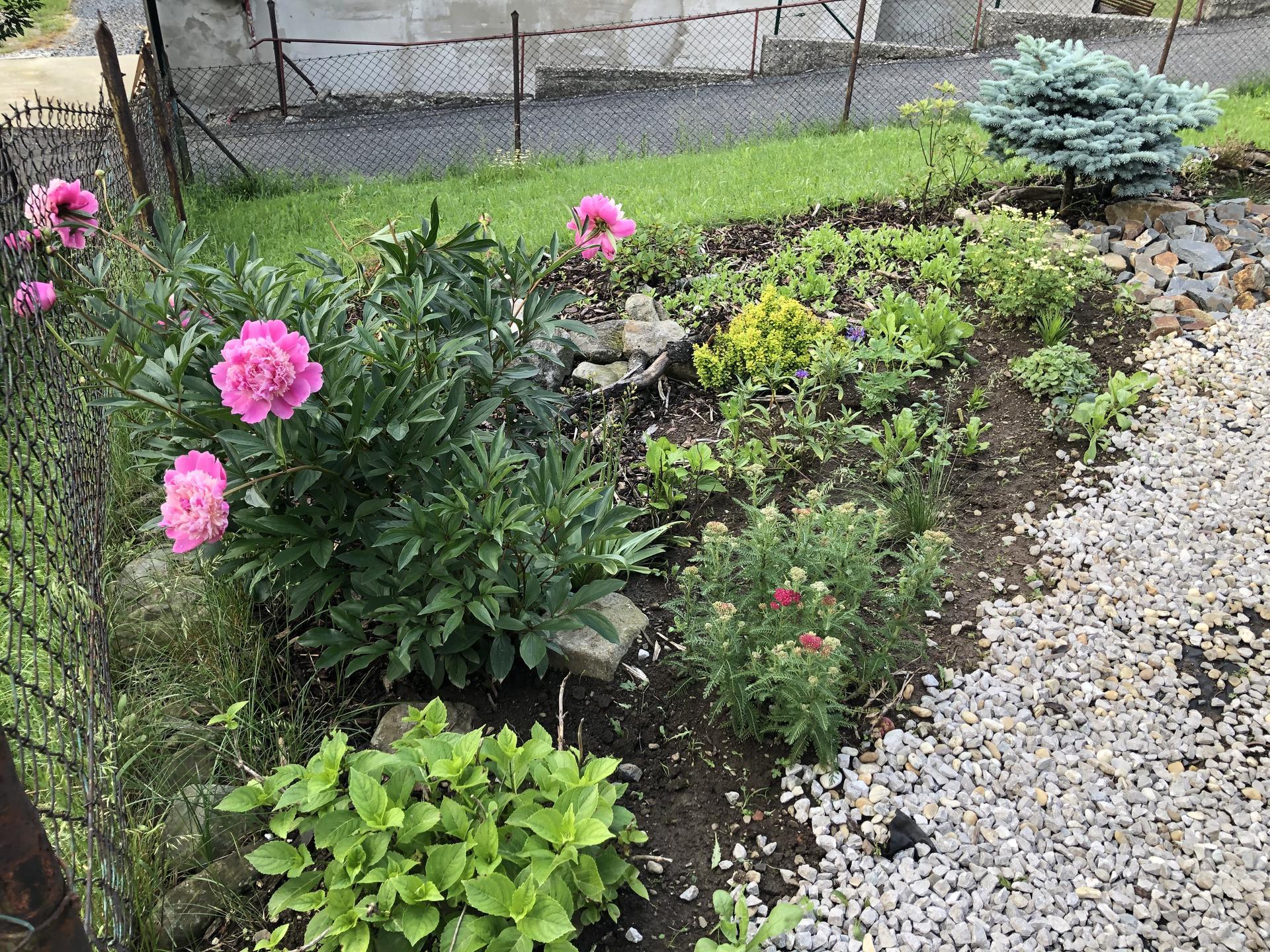 U nás doma a na zahradě 2020 - Obrázek č. 80