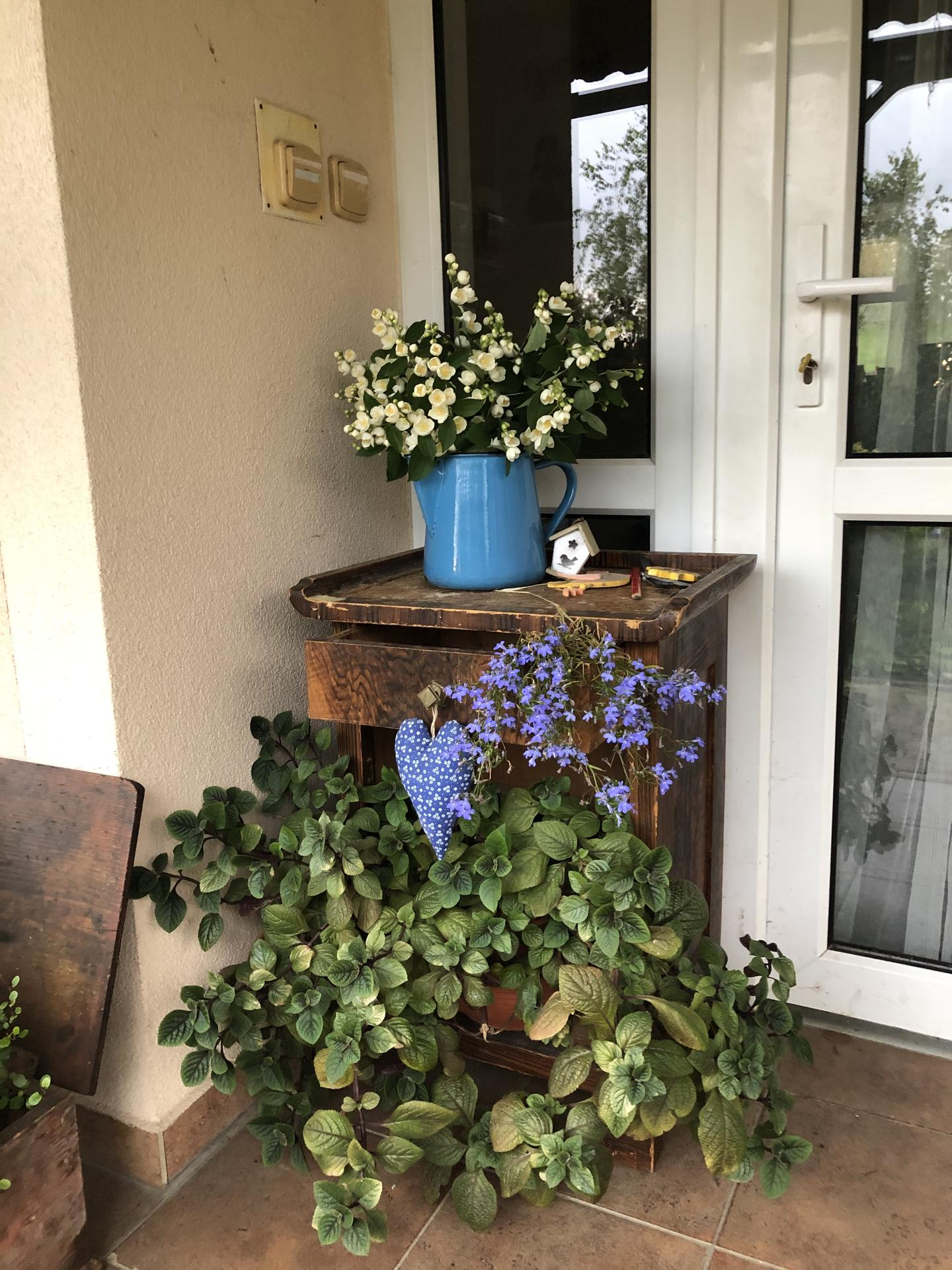 U nás doma a na zahradě 2020 - Obrázek č. 96