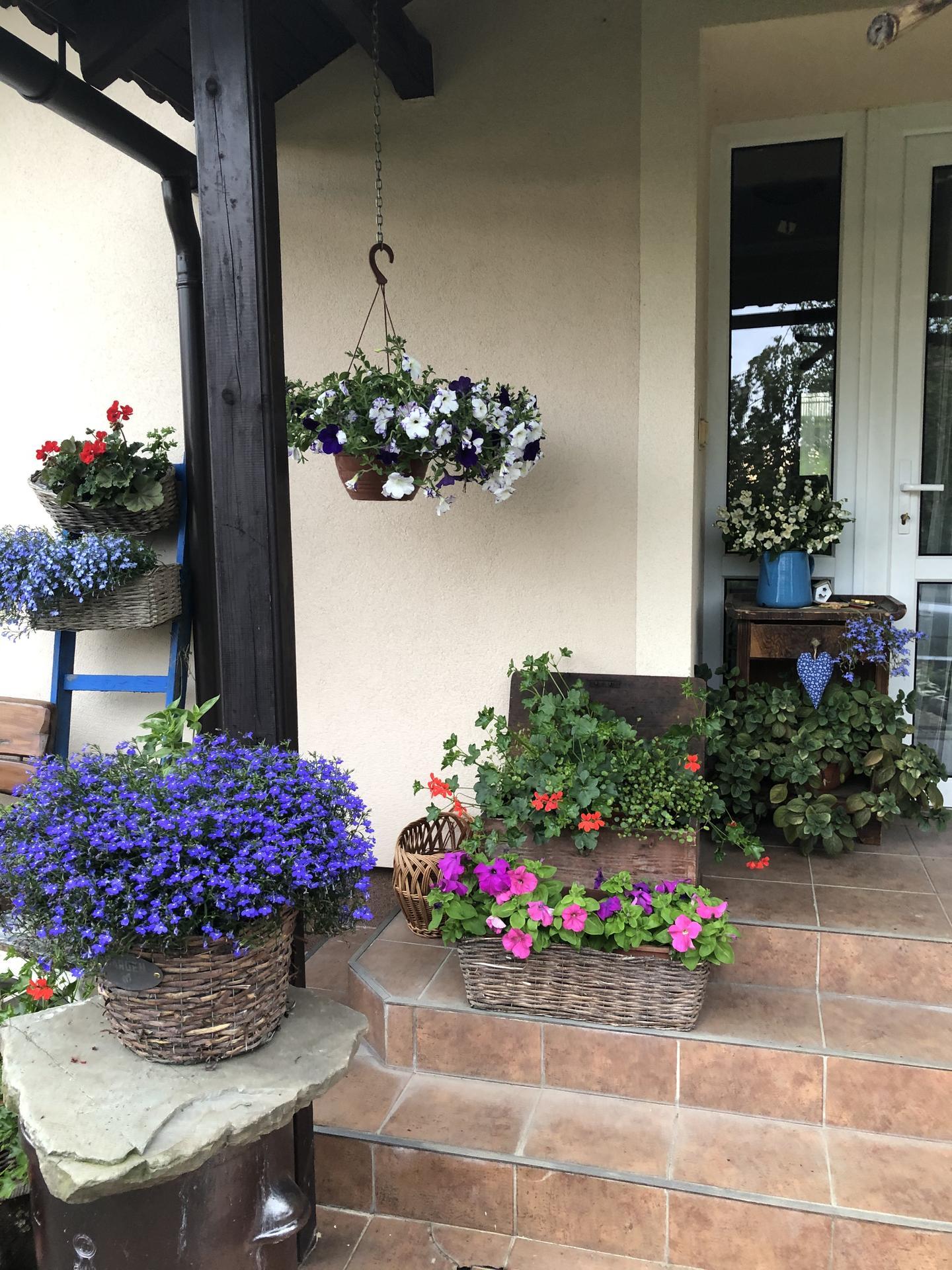 U nás doma a na zahradě 2020 - Obrázek č. 91