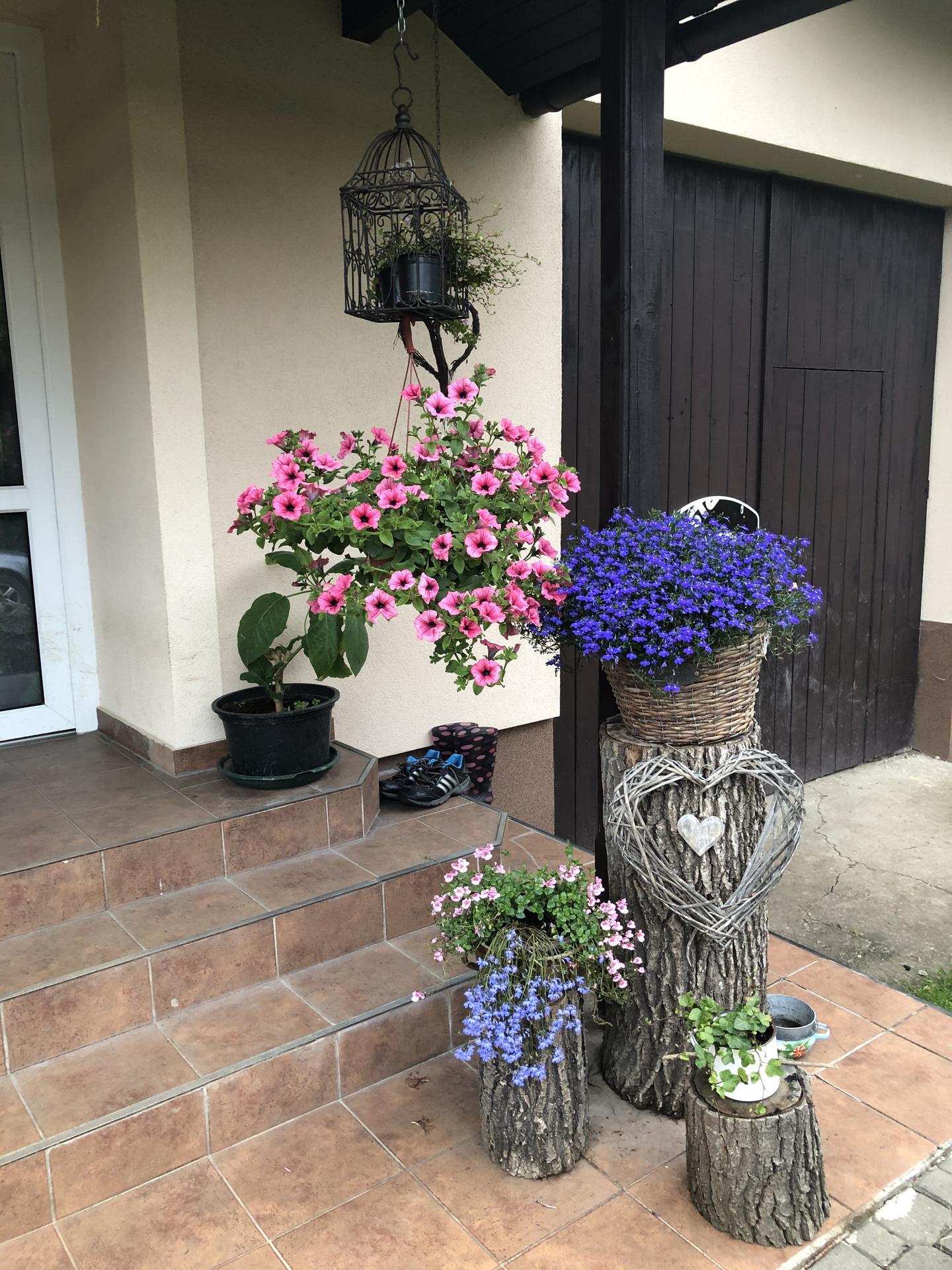 U nás doma a na zahradě 2020 - Obrázek č. 92