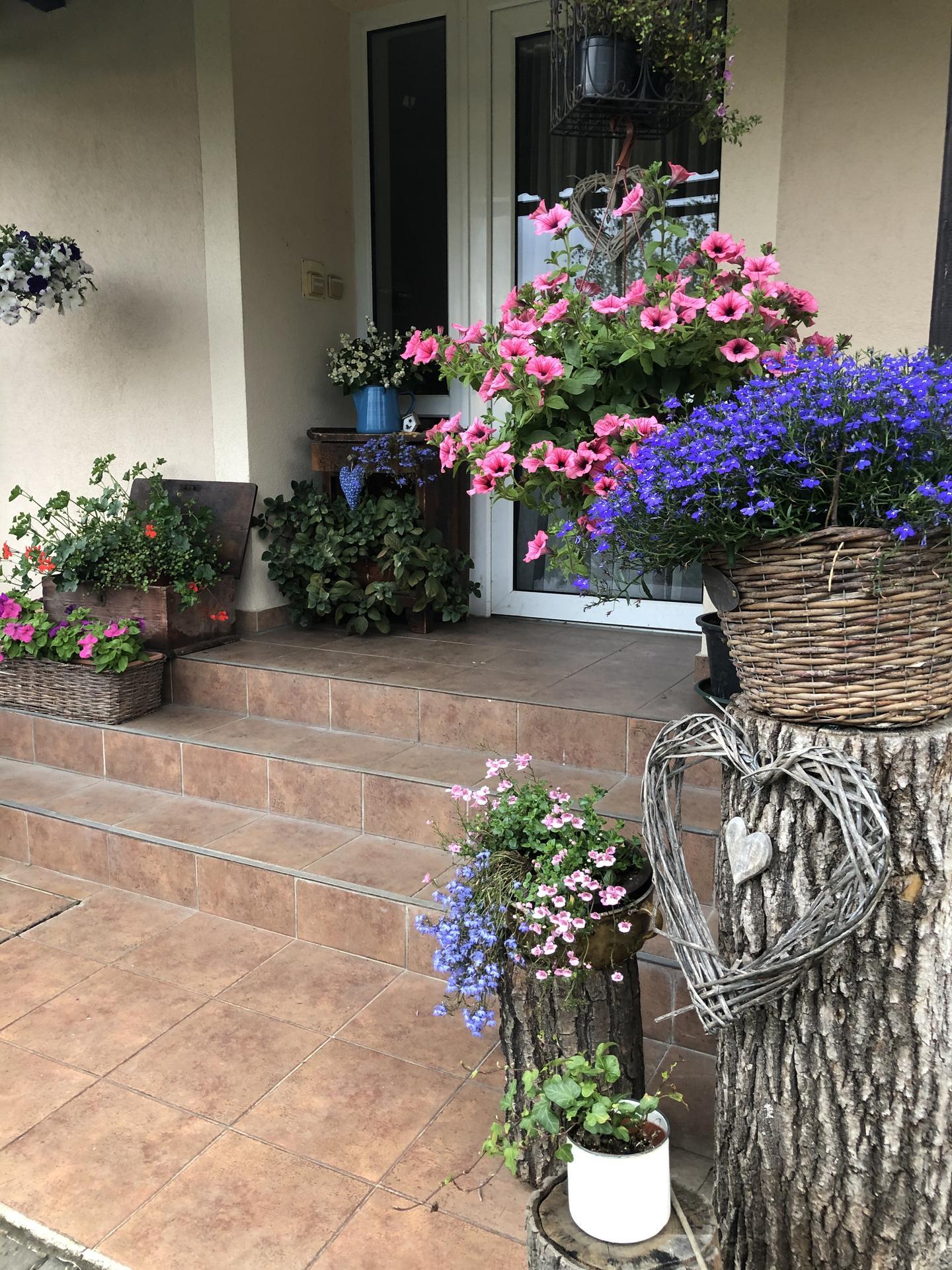 U nás doma a na zahradě 2020 - Obrázek č. 95