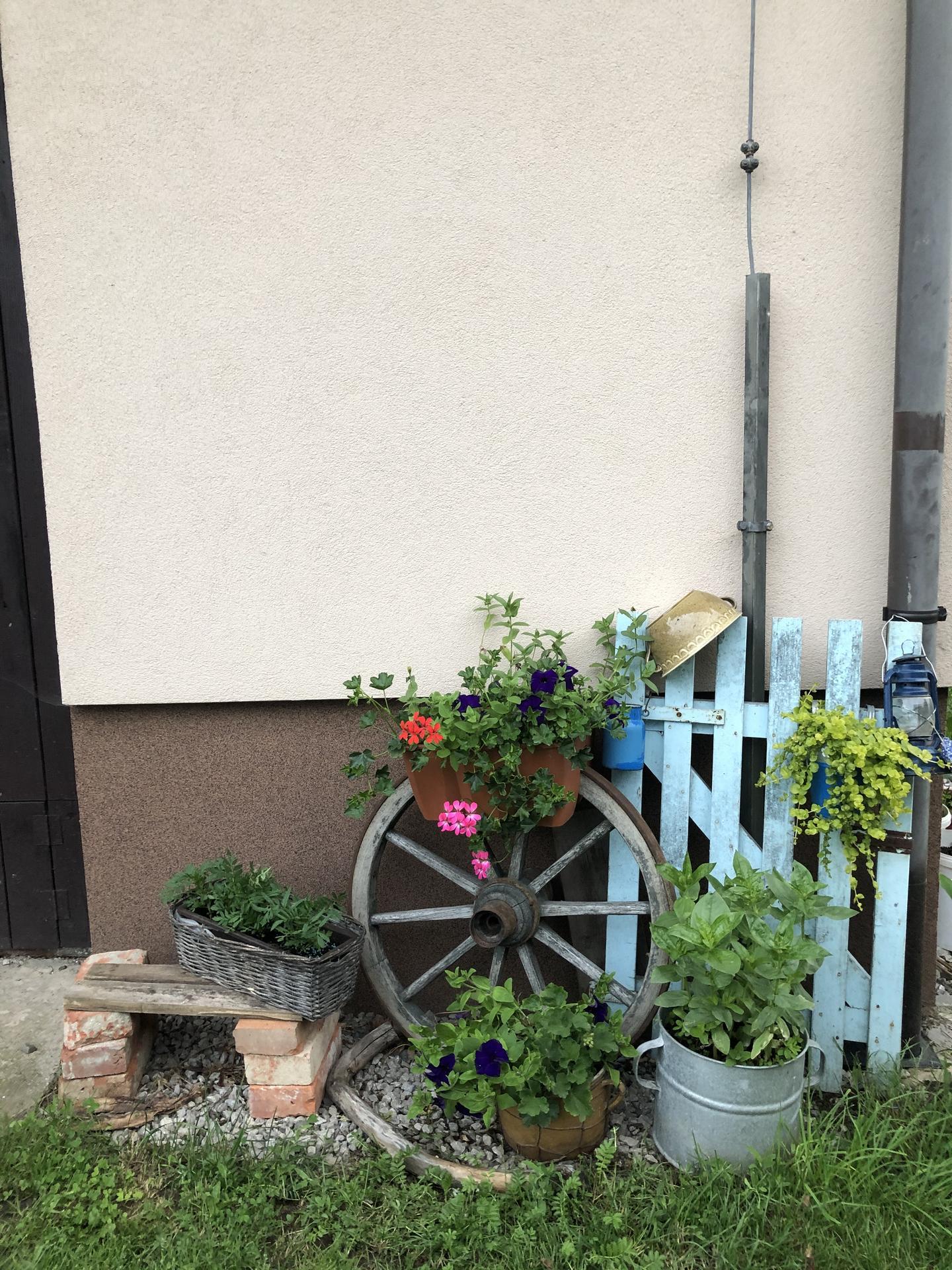 U nás doma a na zahradě 2020 - Obrázek č. 94