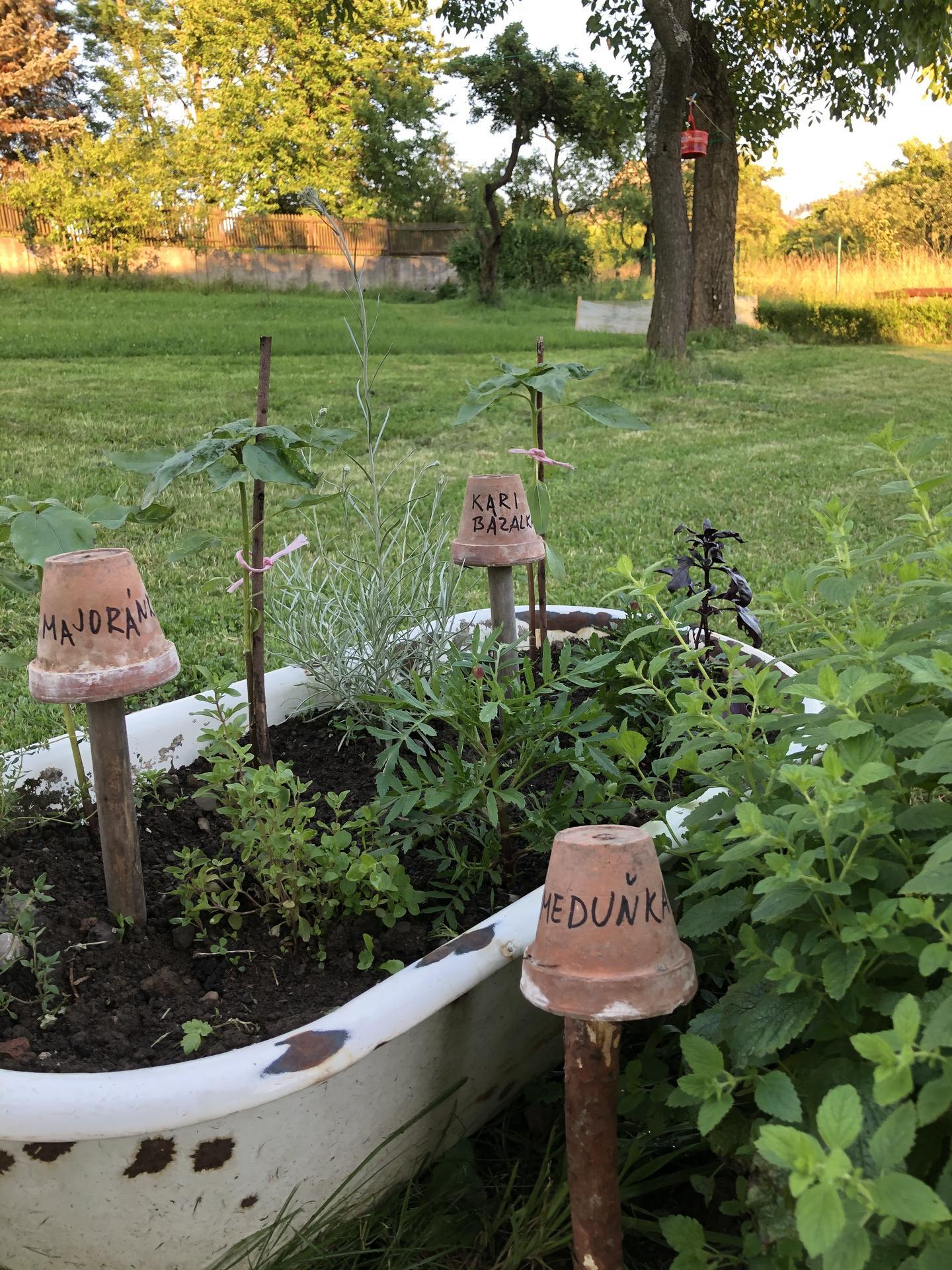 U nás doma a na zahradě 2020 - Obrázek č. 101
