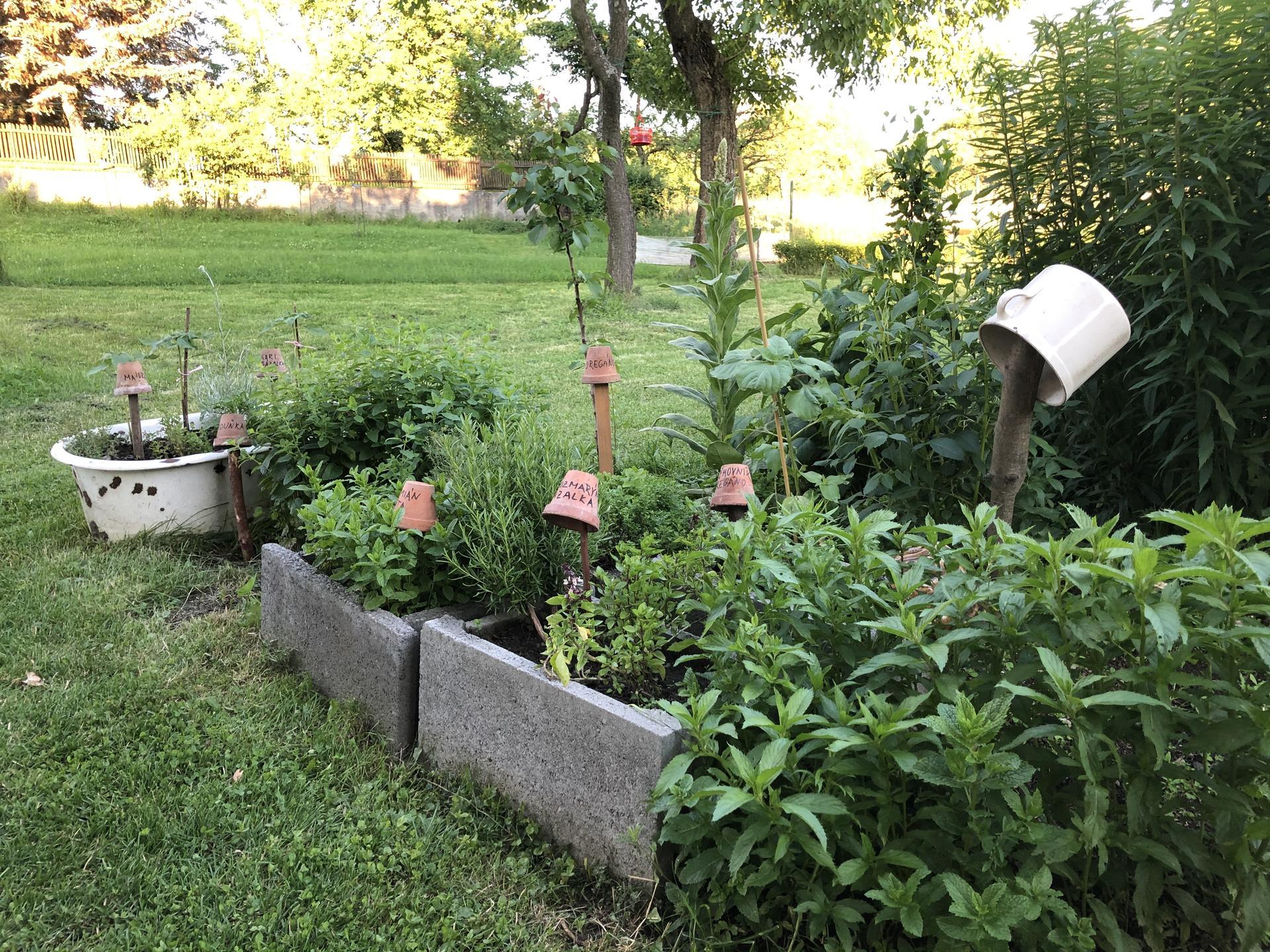 U nás doma a na zahradě 2020 - Obrázek č. 99