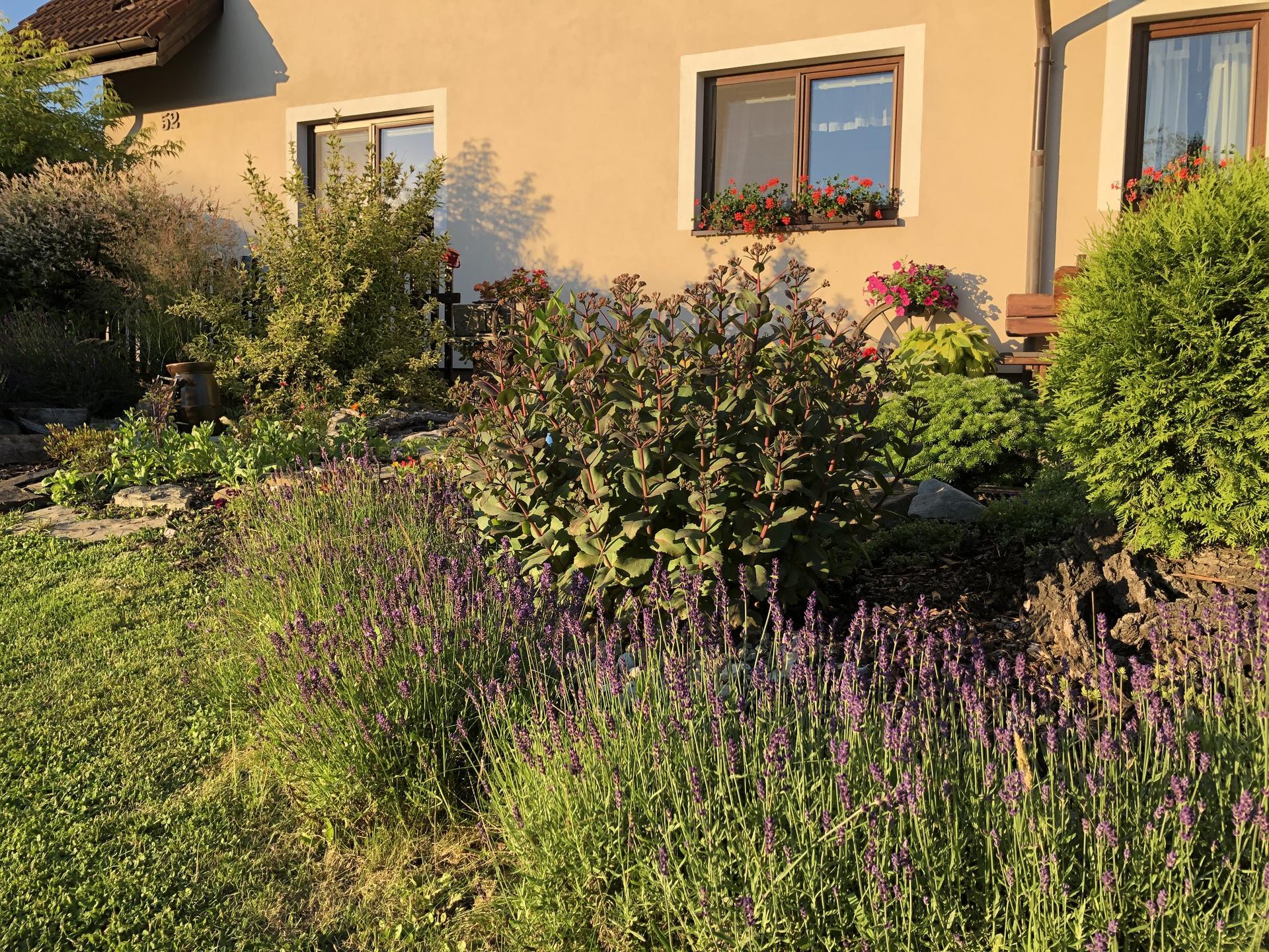 U nás doma a na zahradě 2020 - Obrázek č. 109