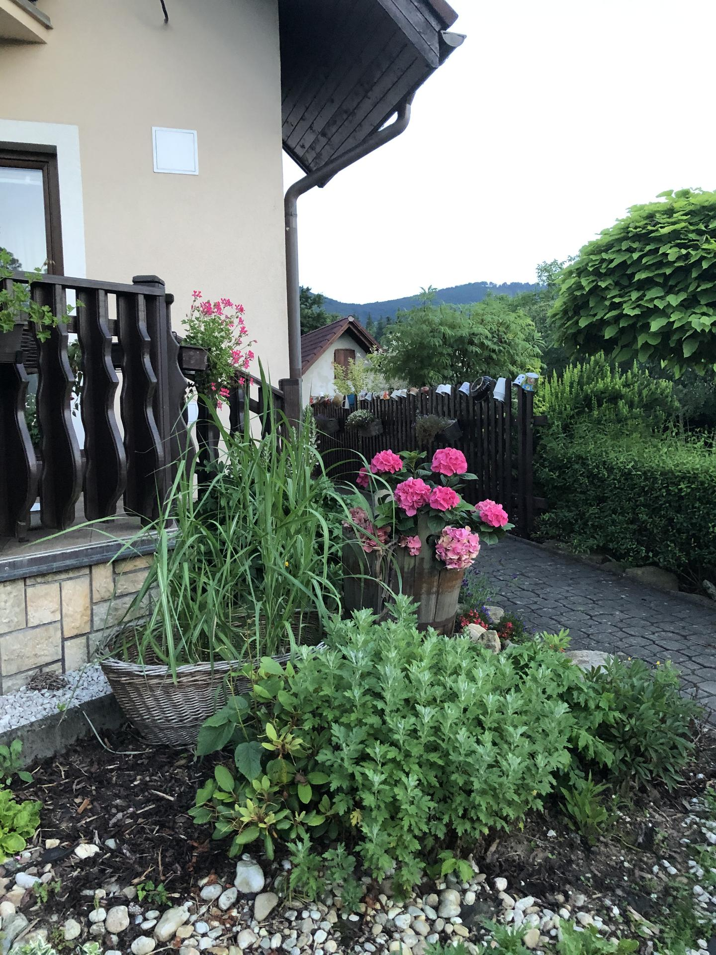 U nás doma a na zahradě 2020 - Obrázek č. 118