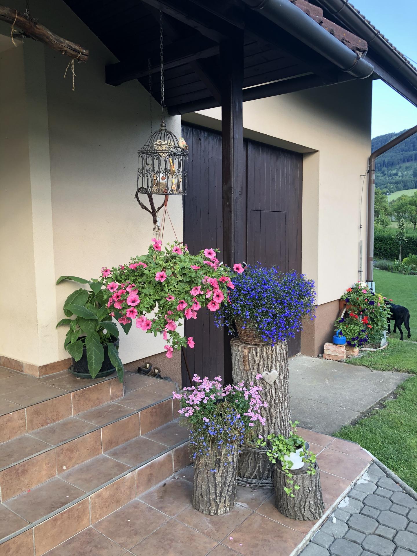 U nás doma a na zahradě 2020 - Obrázek č. 120