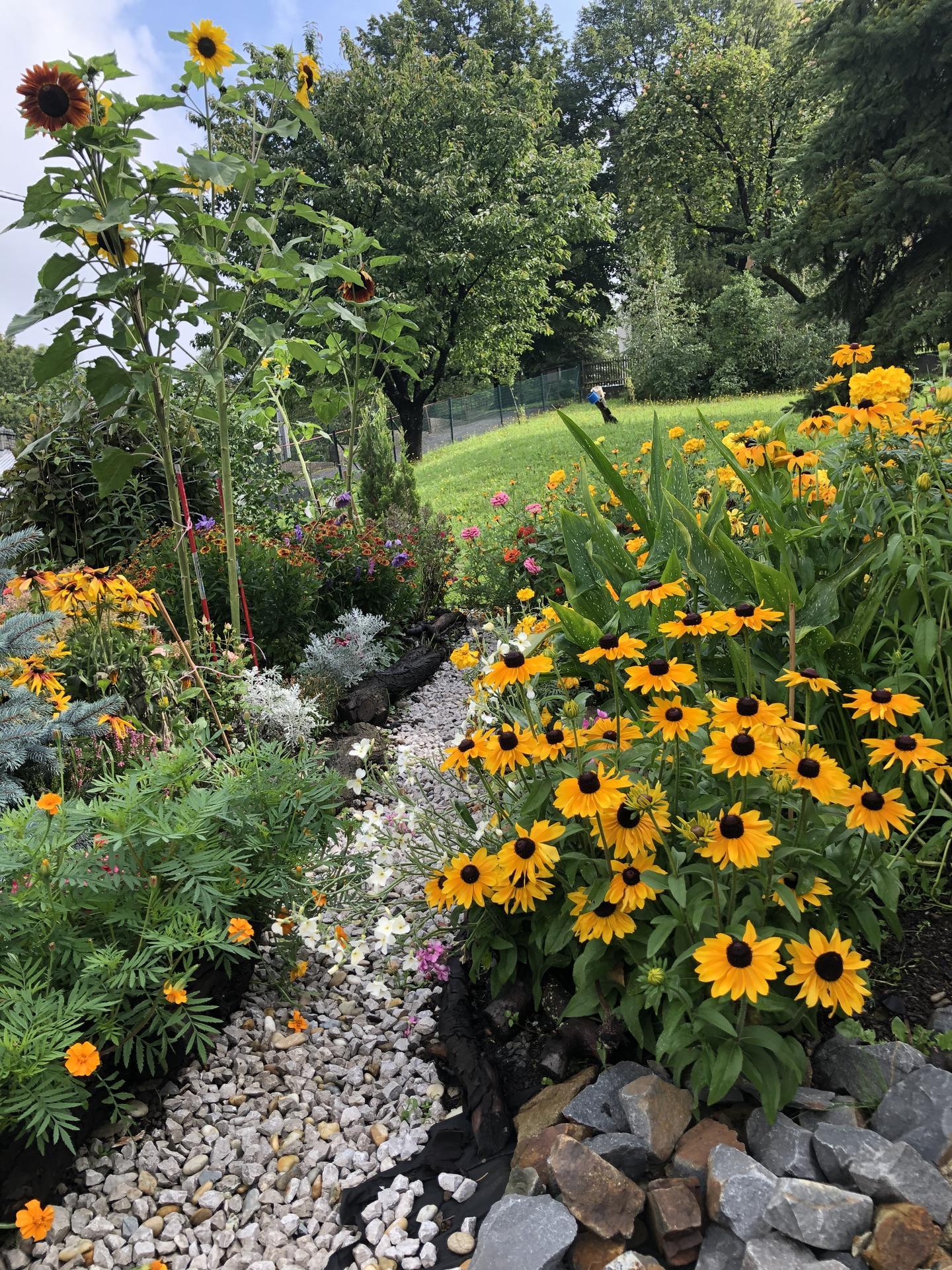 U nás doma a na zahradě 2020 - Obrázek č. 206