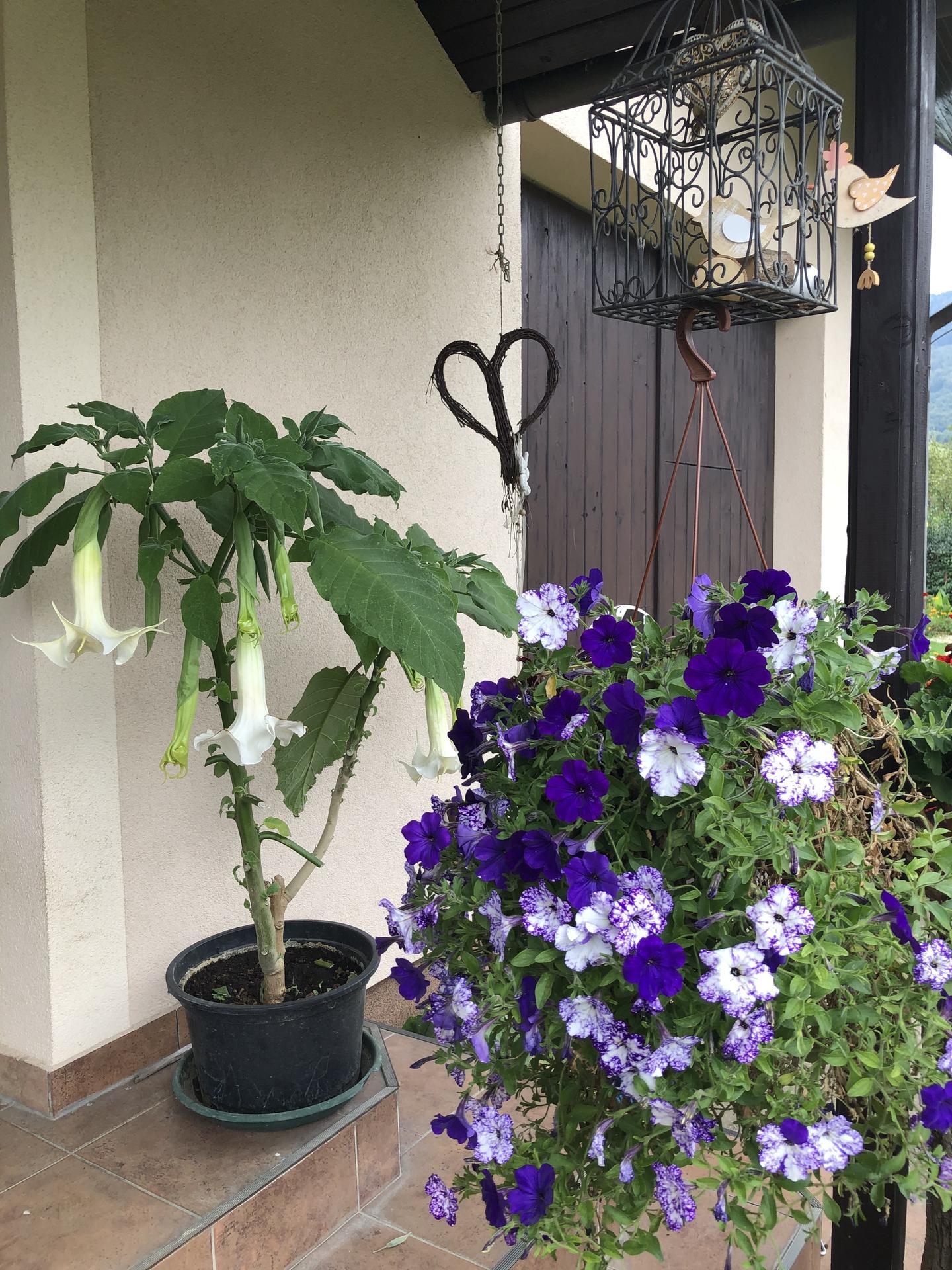 U nás doma a na zahradě 2020 - Obrázek č. 230