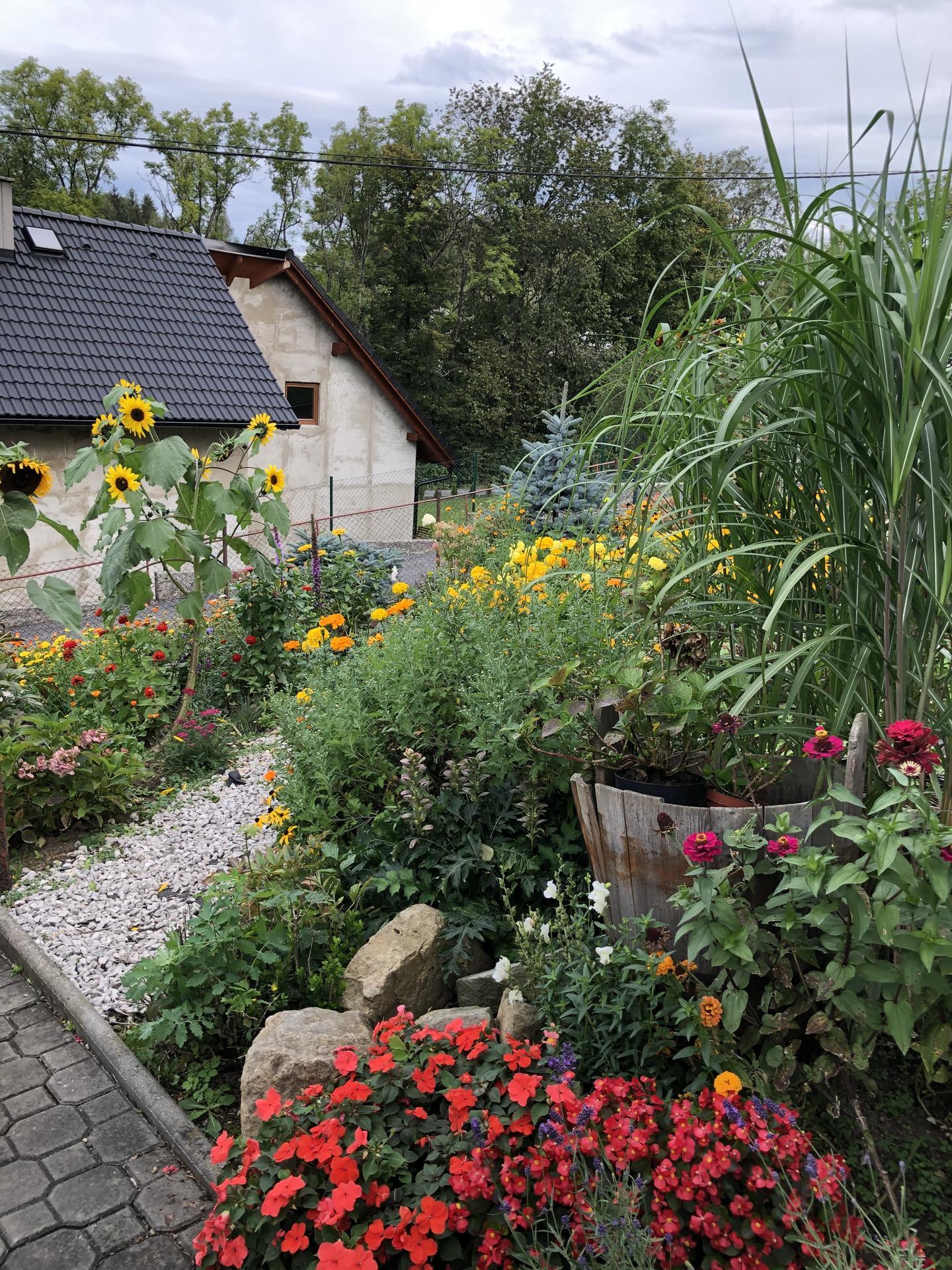U nás doma a na zahradě 2020 - Obrázek č. 231
