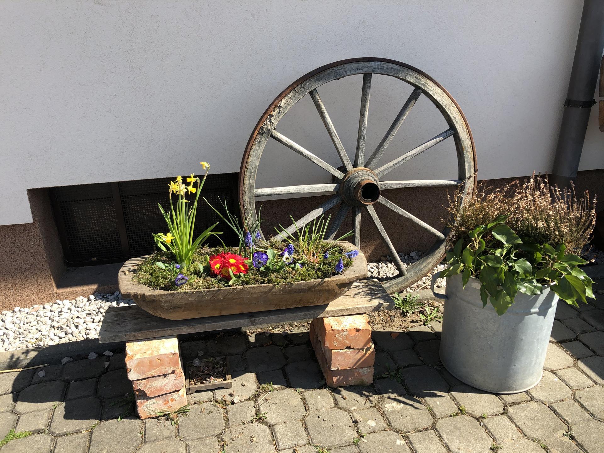 U nás doma a na zahradě 2021 - Obrázek č. 9