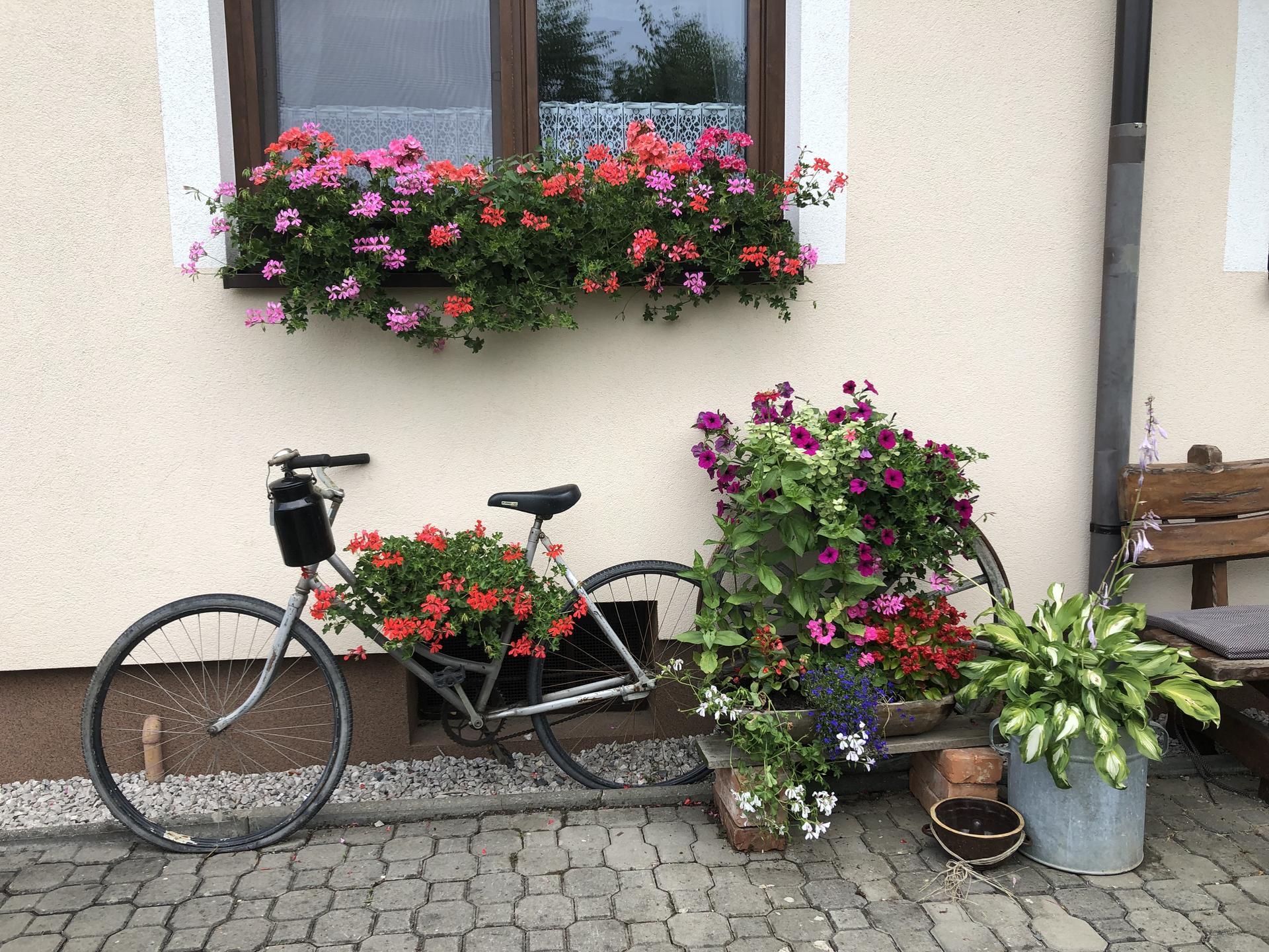 U nás doma a na zahradě 2021 - Obrázek č. 13