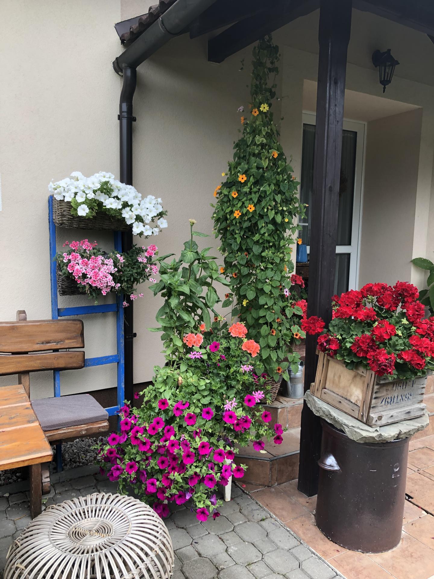 U nás doma a na zahradě 2021 - Obrázek č. 16