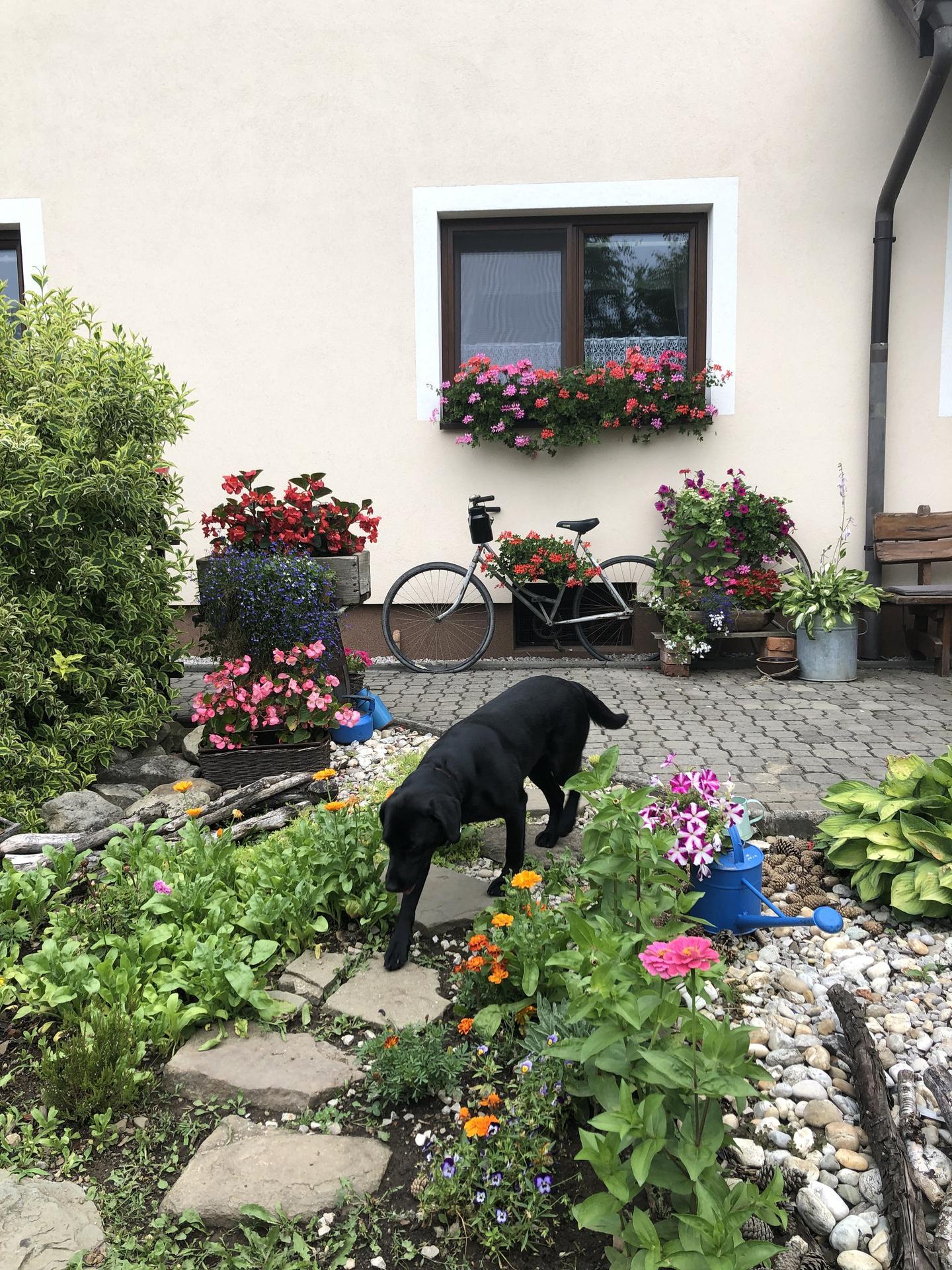 U nás doma a na zahradě 2021 - Obrázek č. 15