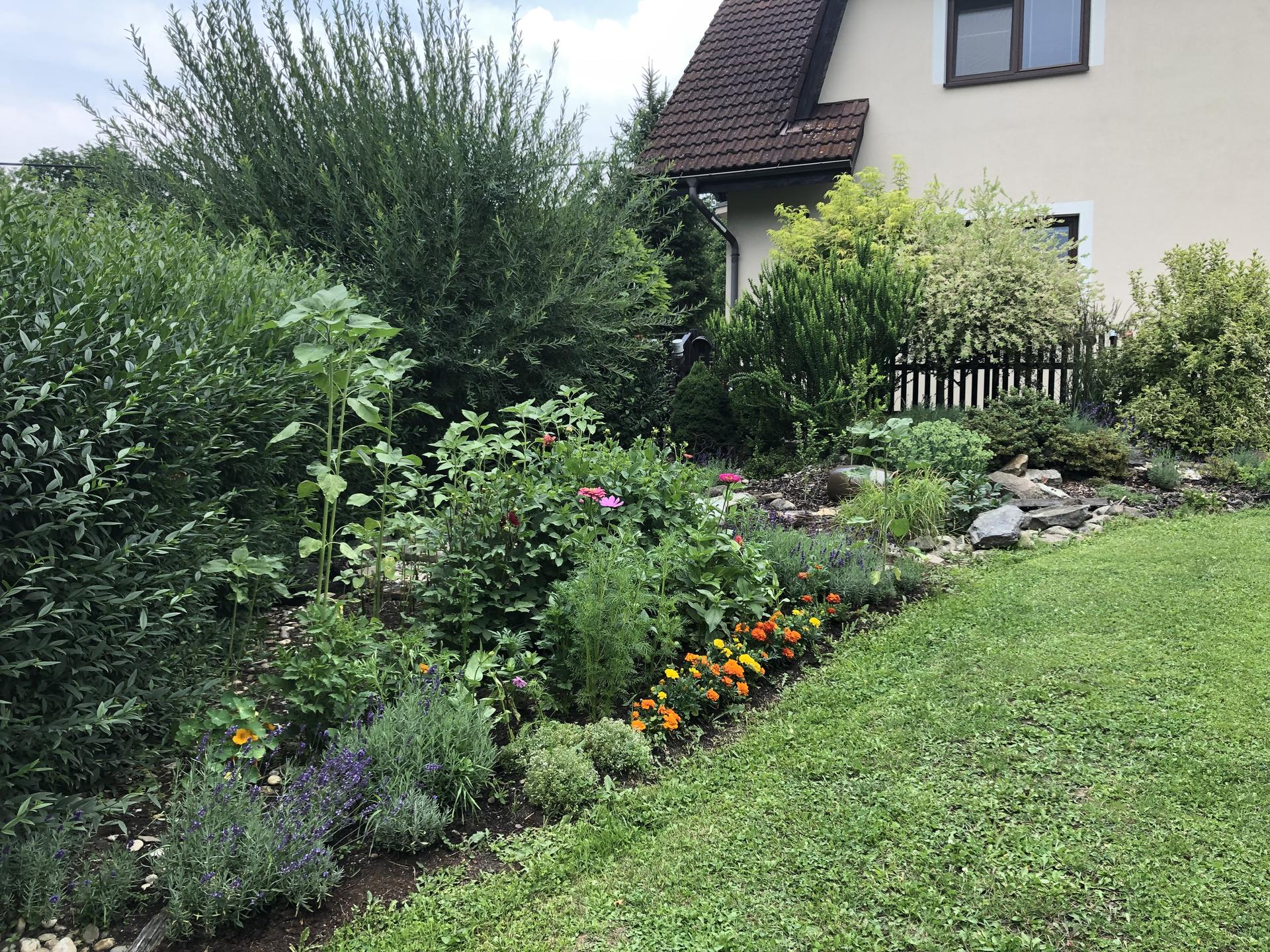 U nás doma a na zahradě 2021 - Obrázek č. 18