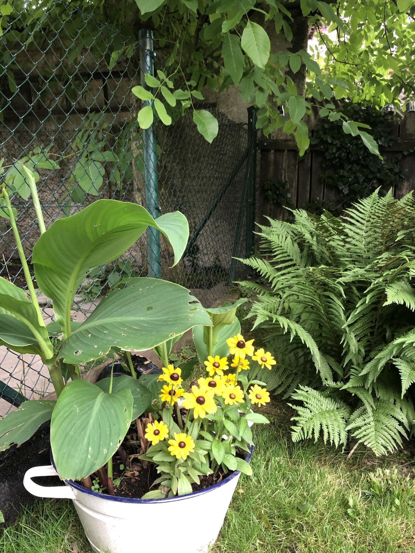 U nás doma a na zahradě 2021 - Obrázek č. 22