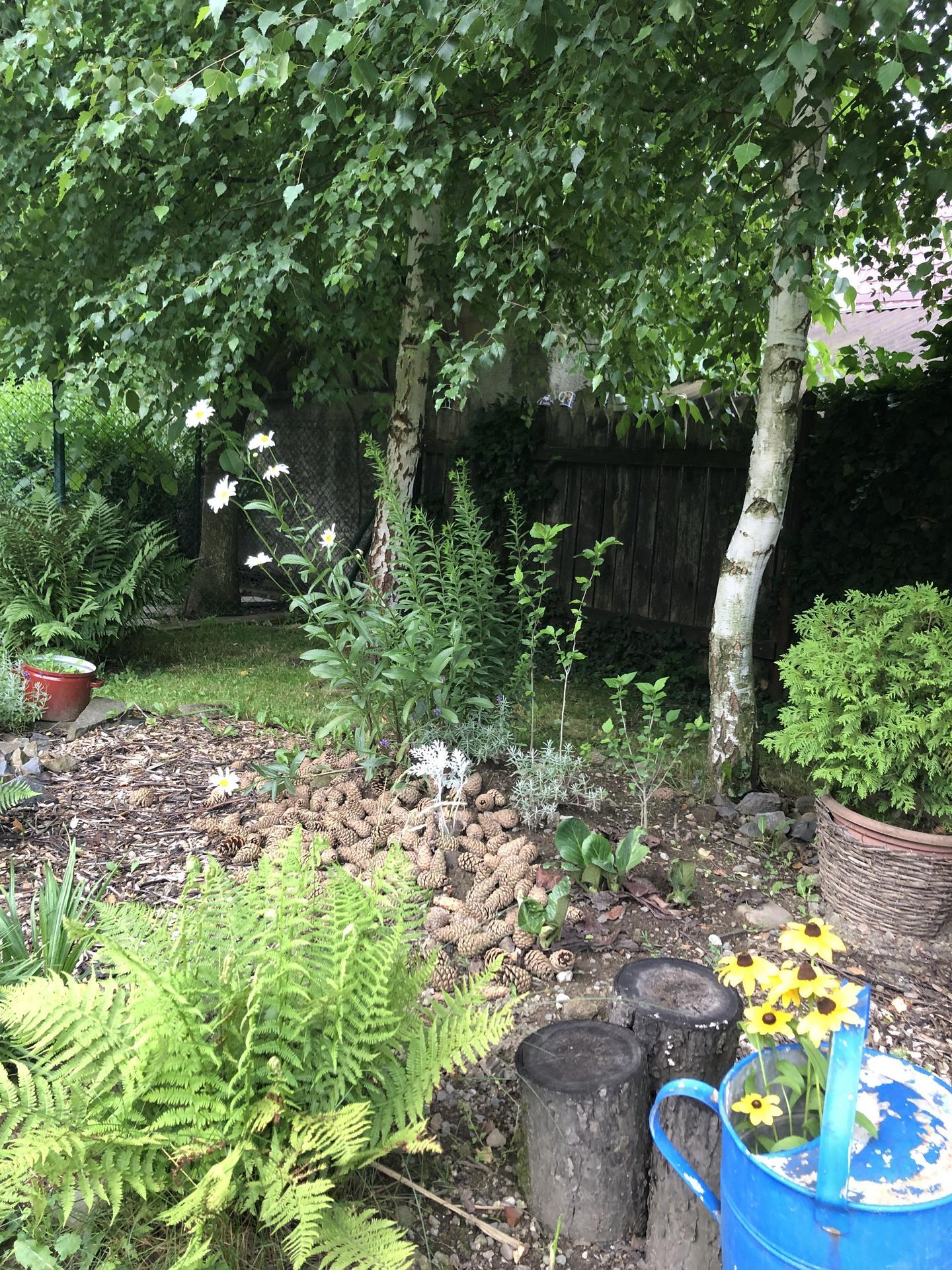 U nás doma a na zahradě 2021 - Obrázek č. 23
