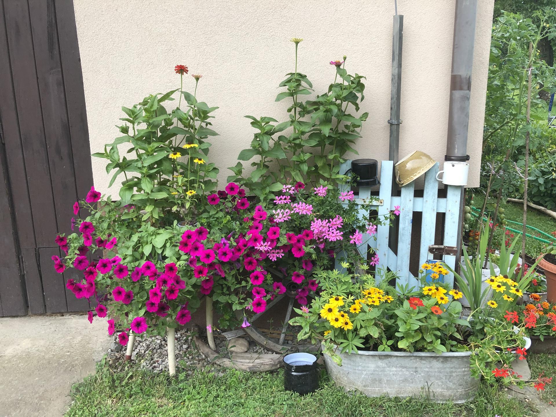 U nás doma a na zahradě 2021 - Obrázek č. 24