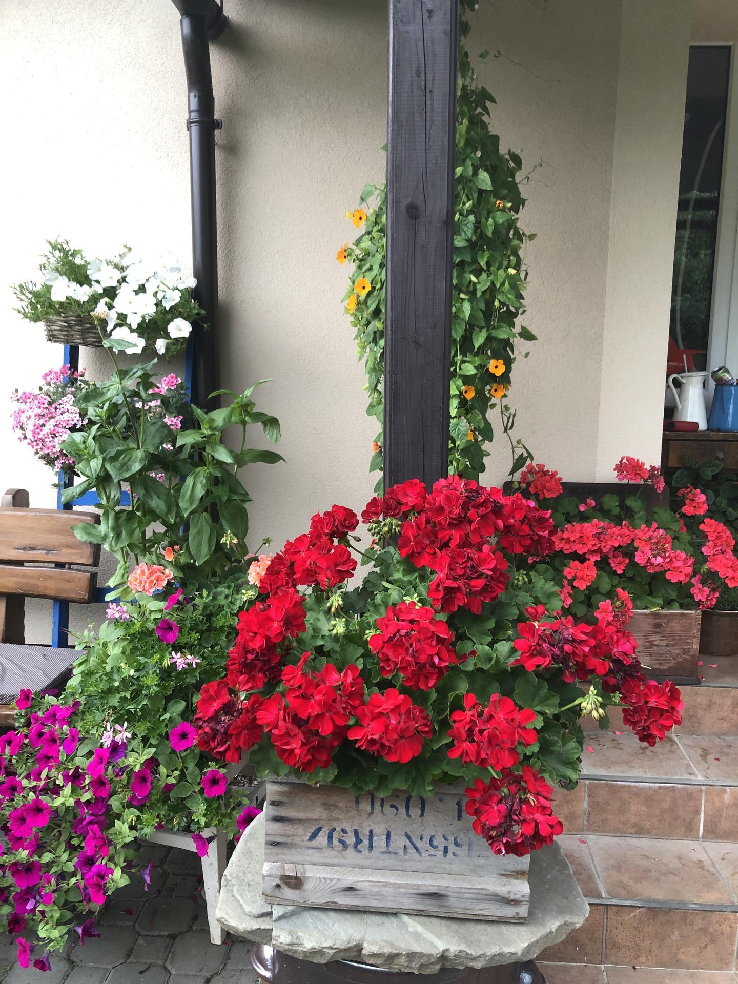 U nás doma a na zahradě 2021 - Obrázek č. 27