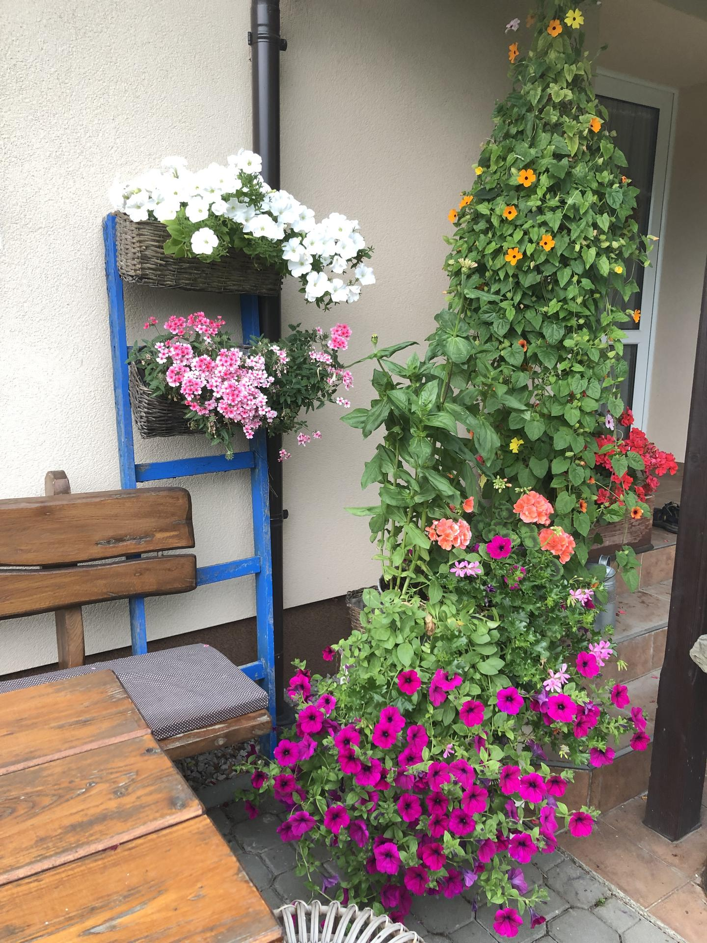 U nás doma a na zahradě 2021 - Obrázek č. 28
