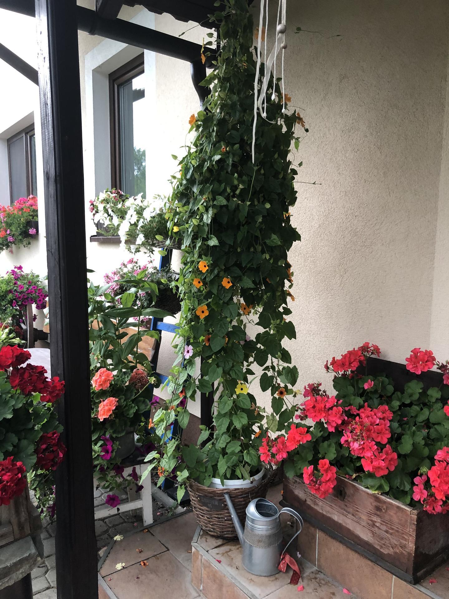 U nás doma a na zahradě 2021 - Obrázek č. 26