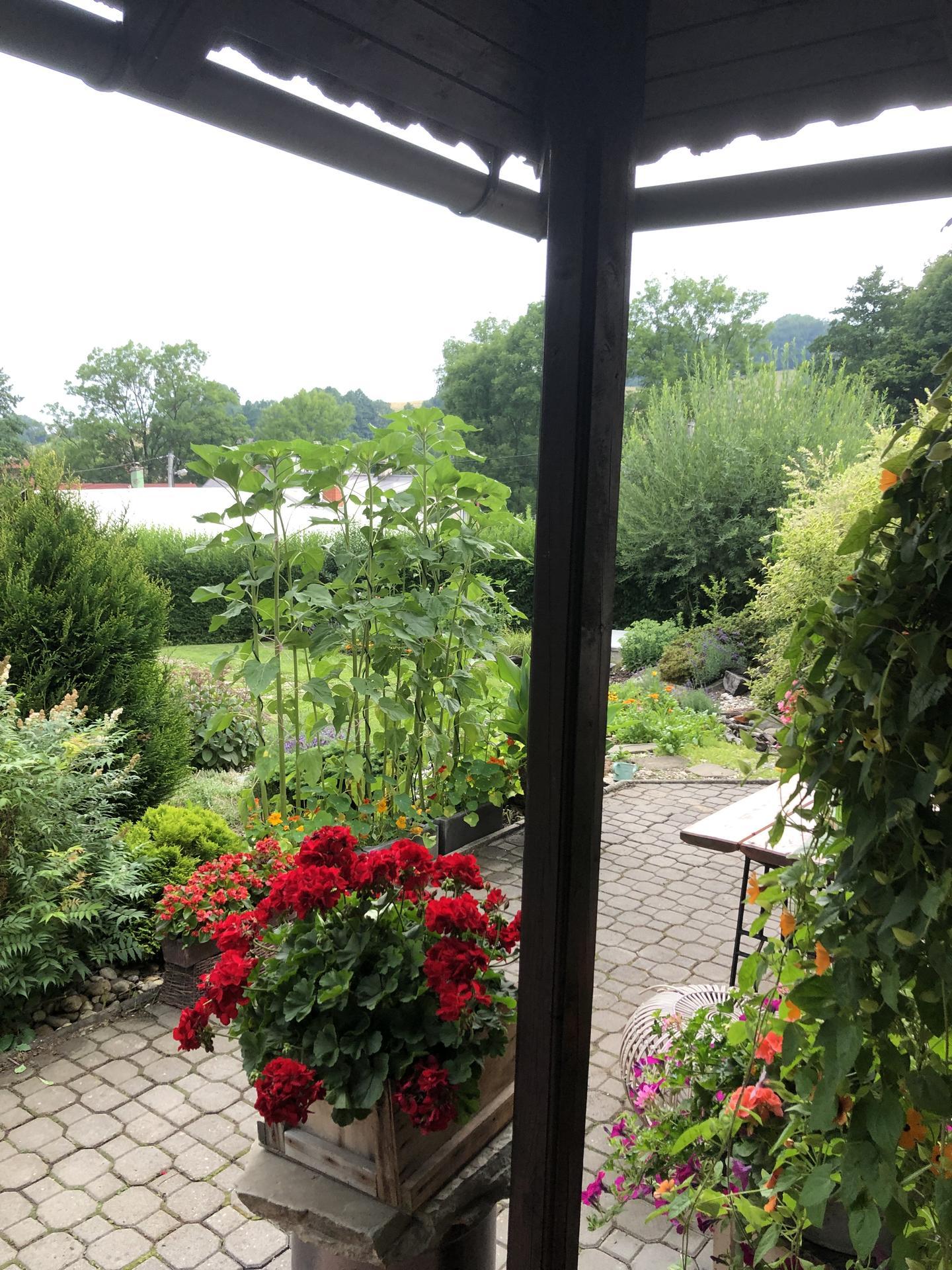 U nás doma a na zahradě 2021 - Obrázek č. 25