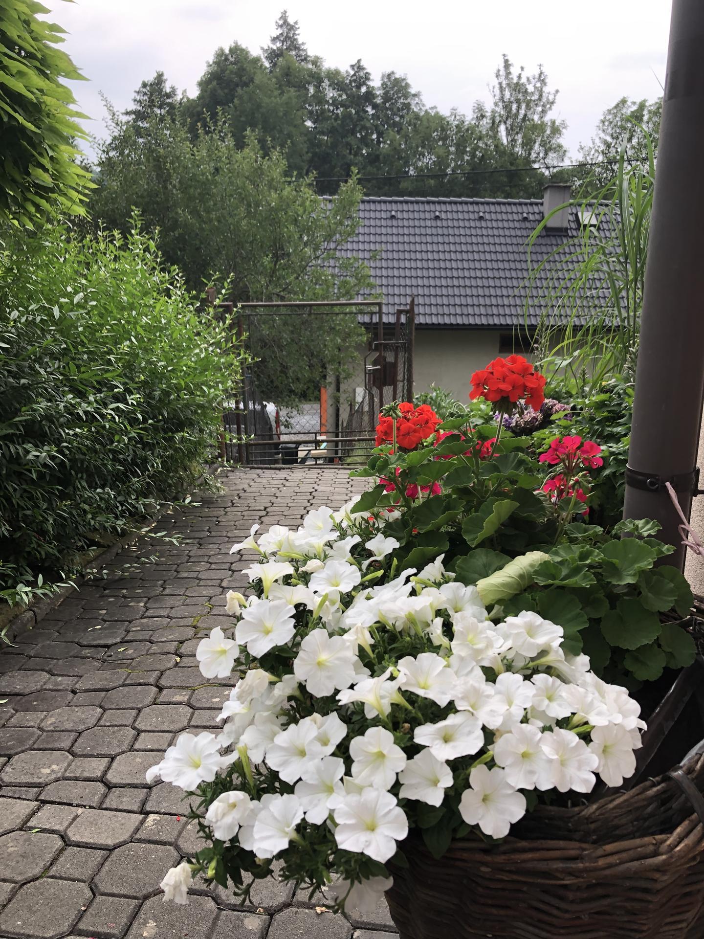 U nás doma a na zahradě 2021 - Obrázek č. 30