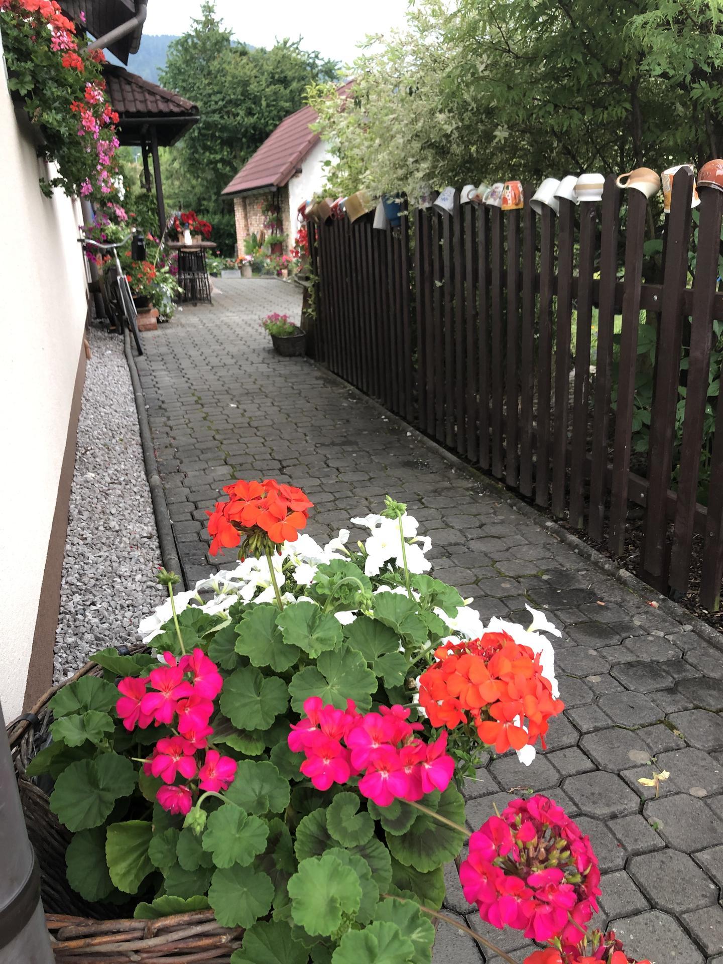 U nás doma a na zahradě 2021 - Obrázek č. 34