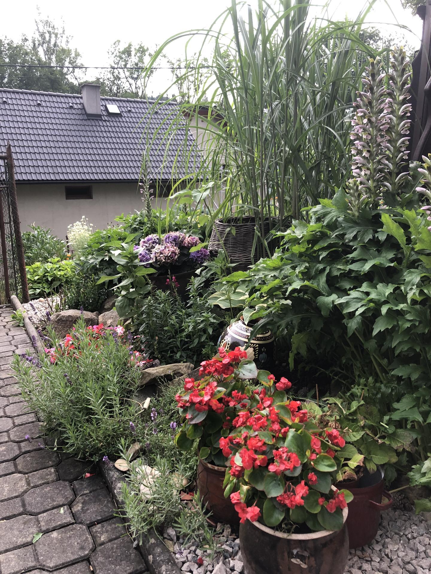 U nás doma a na zahradě 2021 - Obrázek č. 31