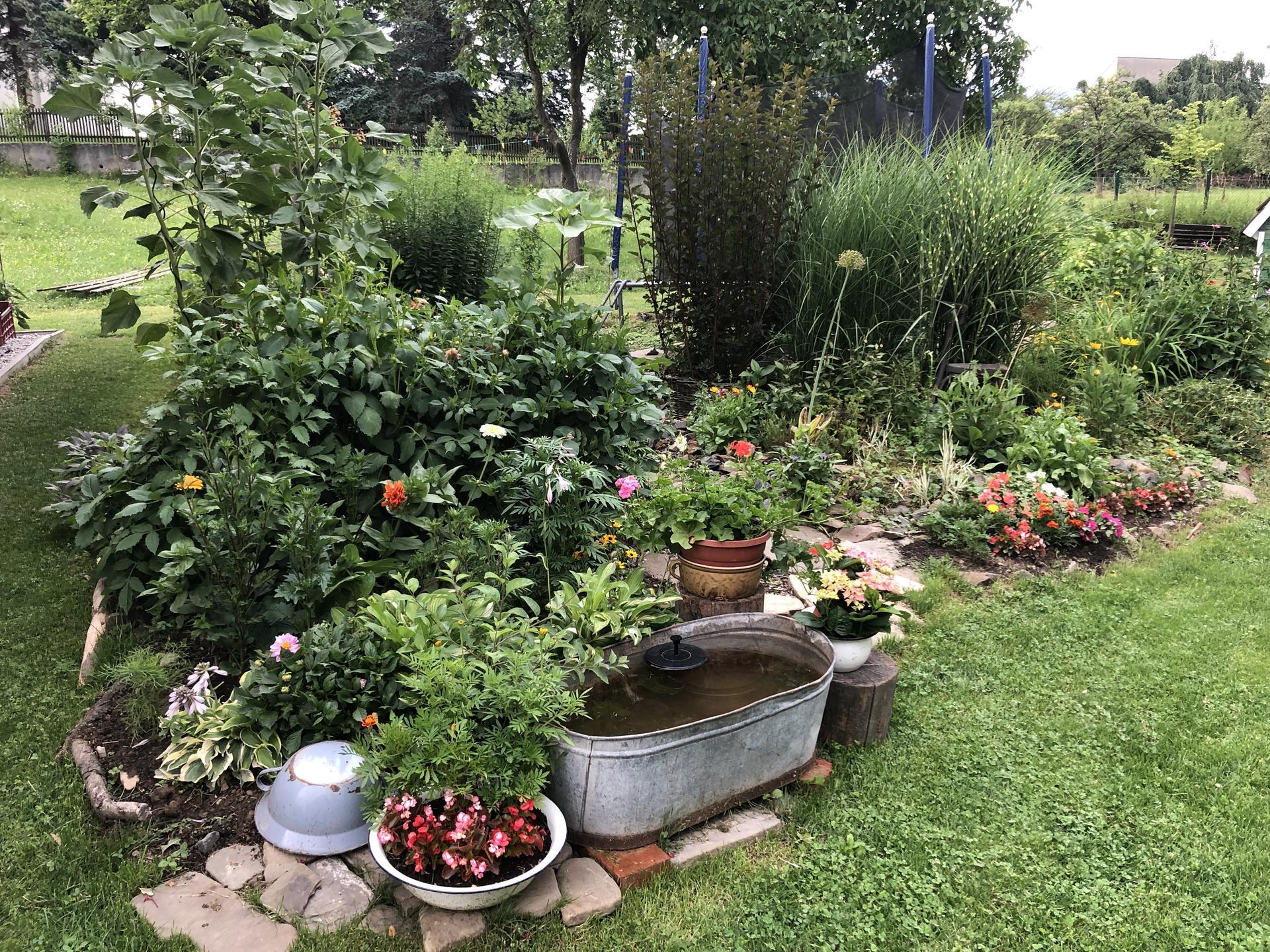 U nás doma a na zahradě 2021 - Obrázek č. 36